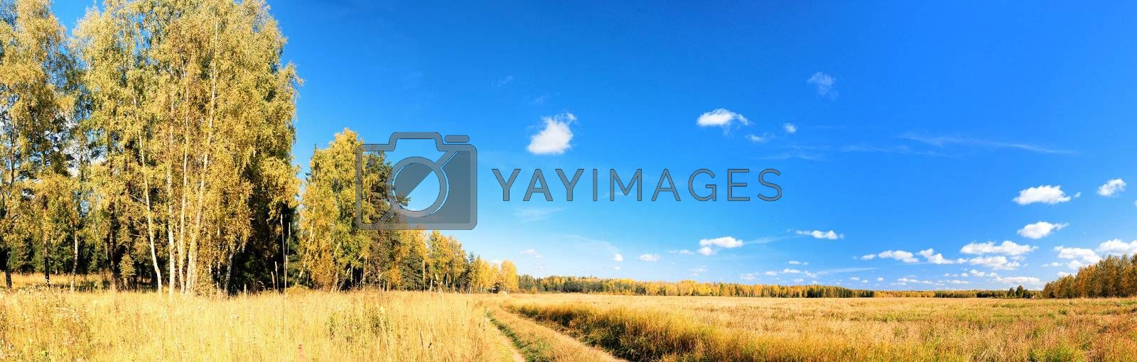 vibrant image of rural road and blue sky panorama