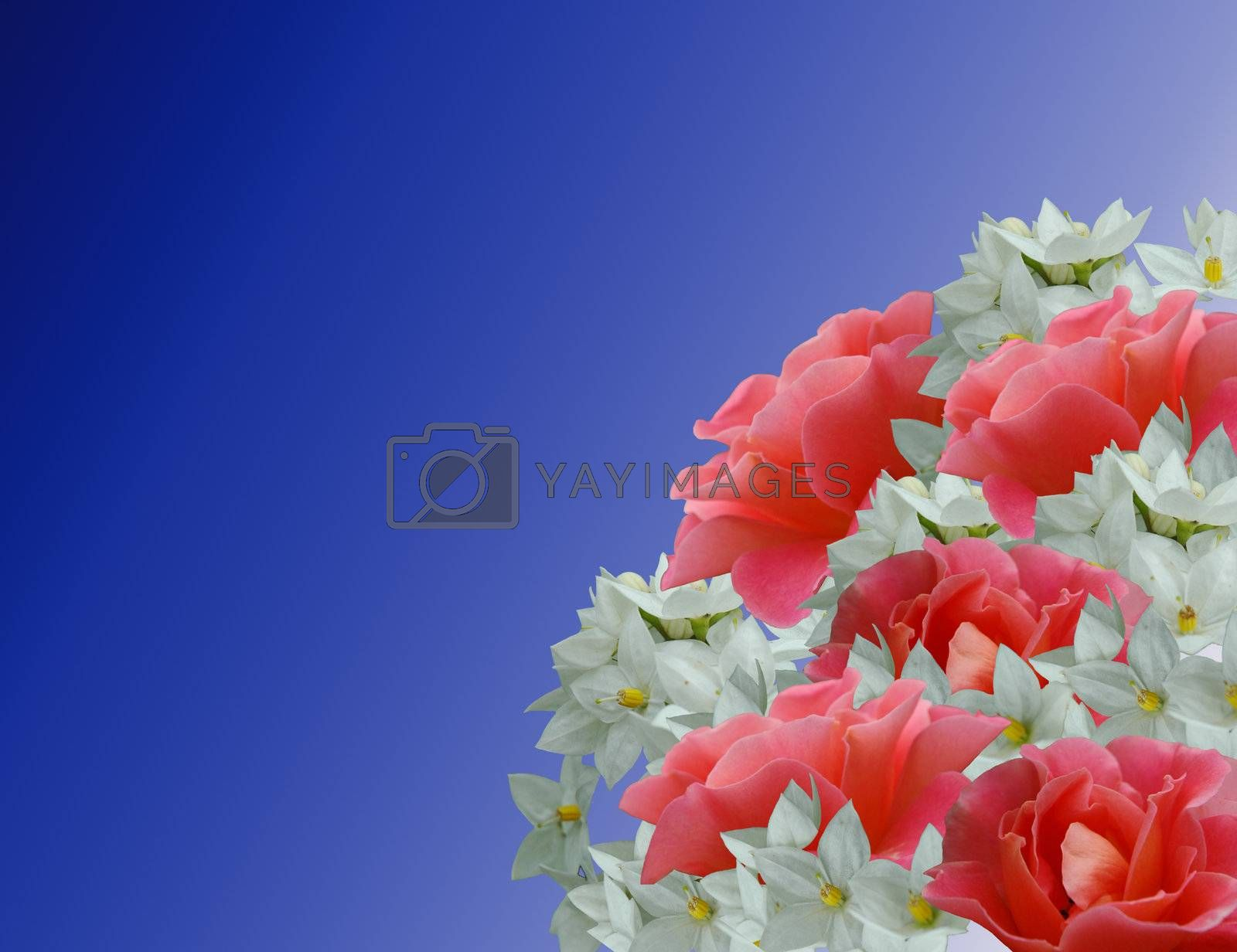 Royalty free image of Bouquet by carla720