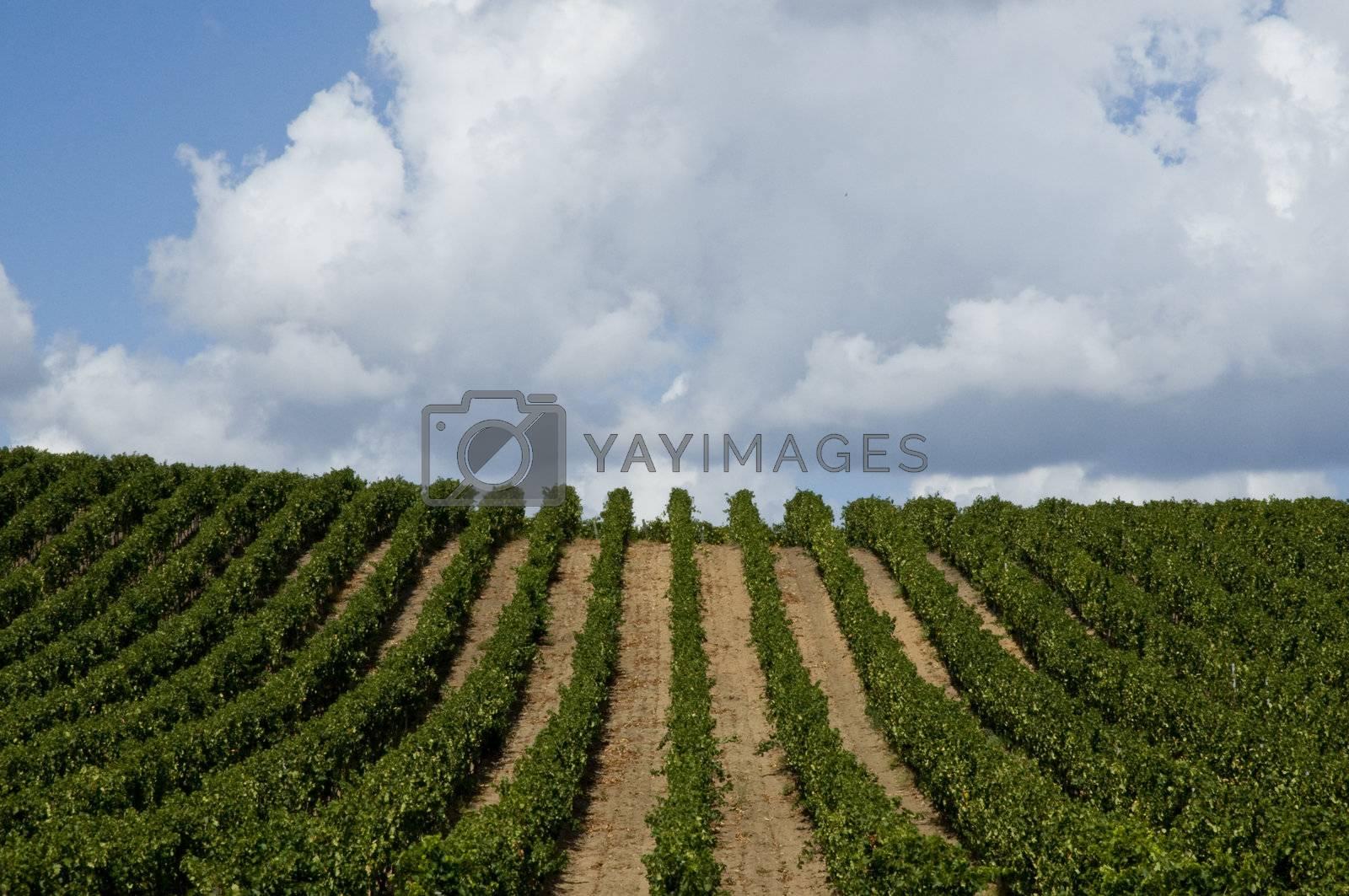 Rows hill in Sardinia
