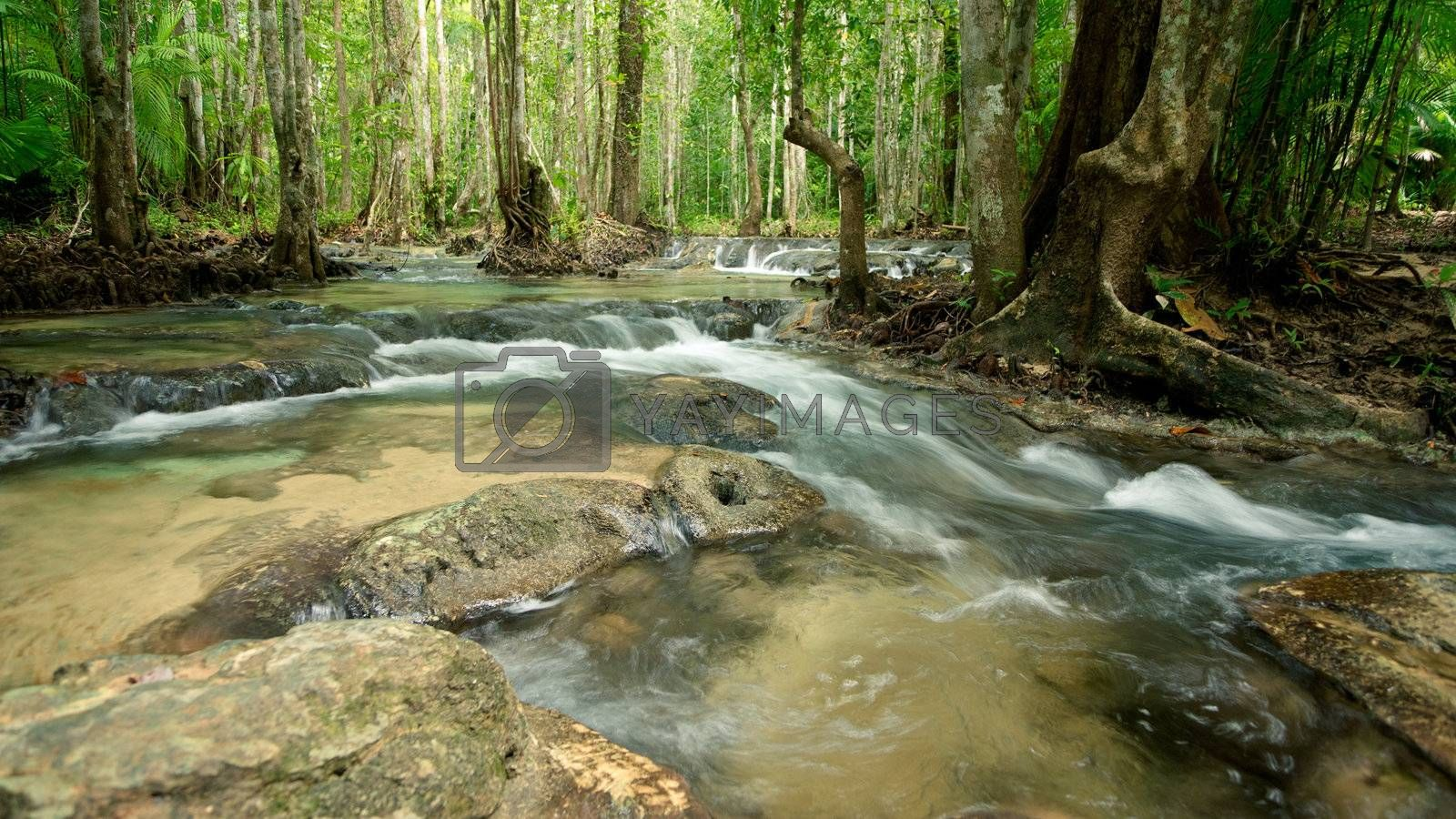 River stream in tropical forest, Thailand, Asia