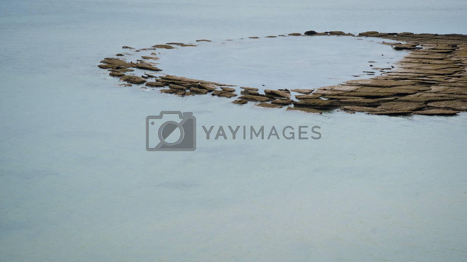 Gastropod fossil in Andaman sea, Thailand, Krabi province