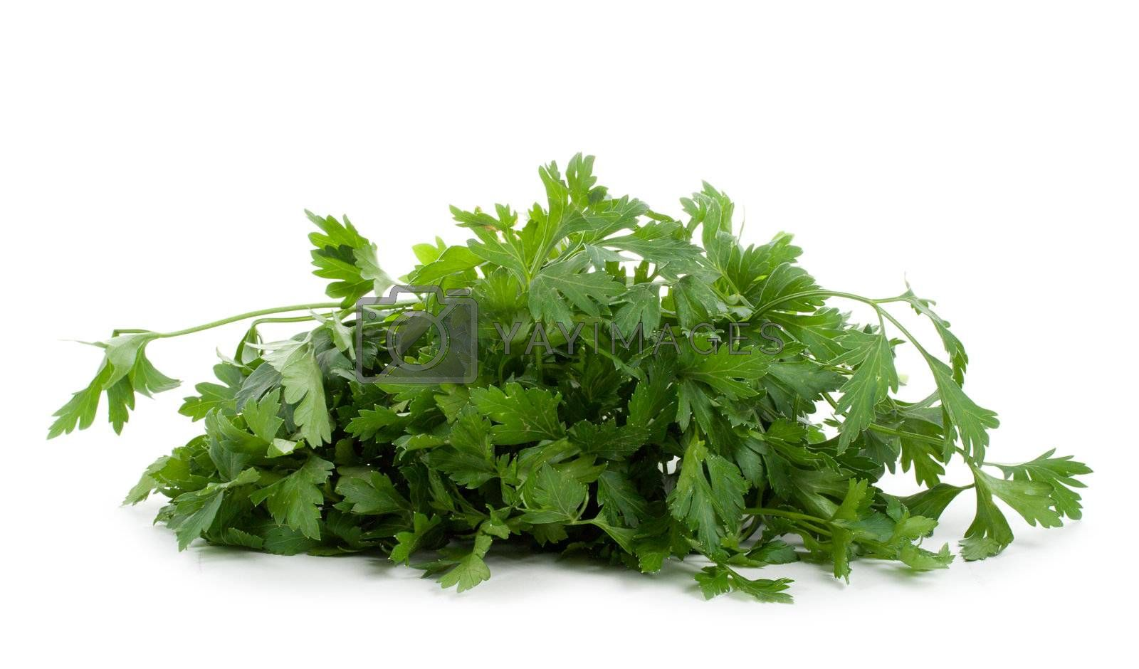 bunch of green parsley, isolated on white