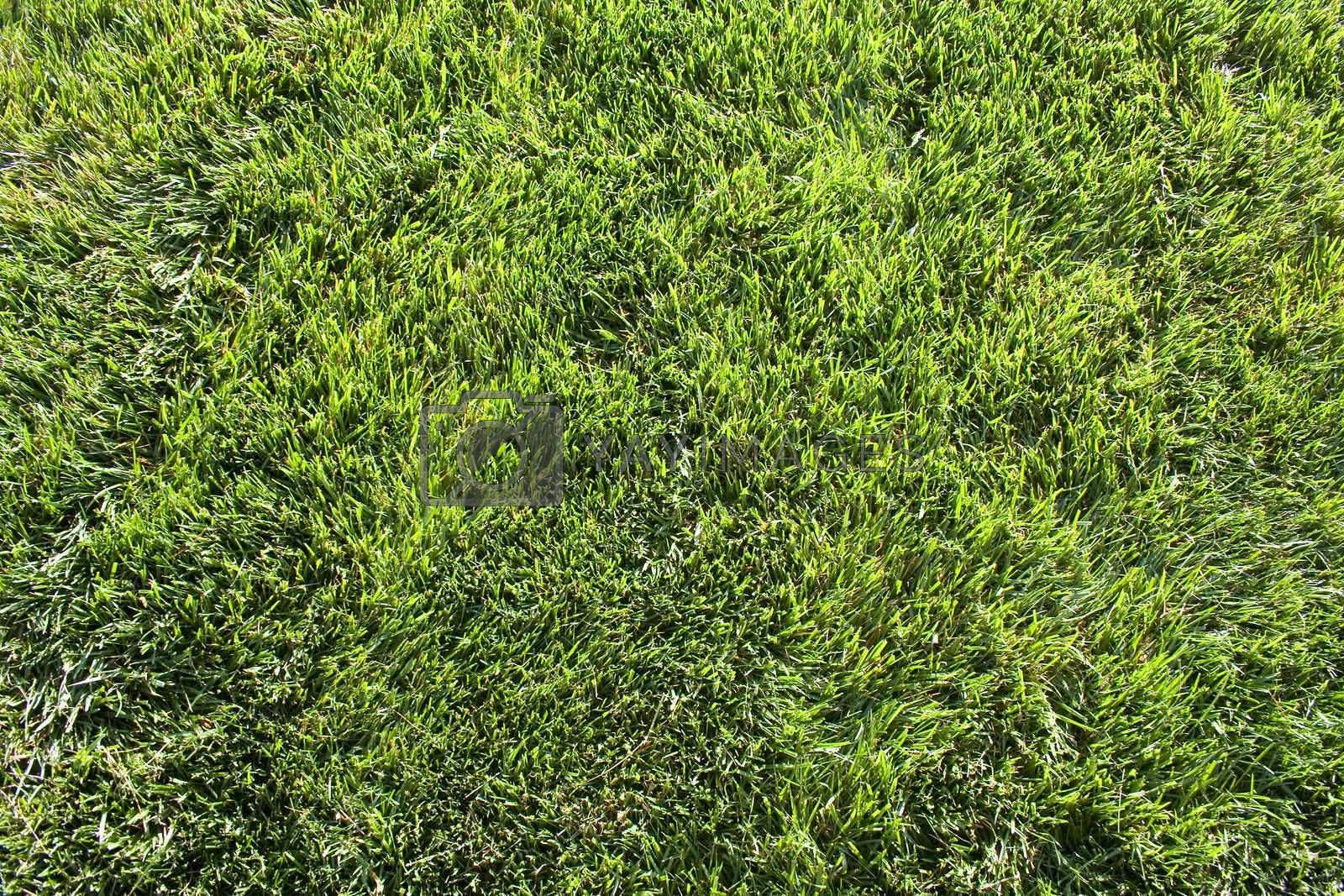 A top-down view of a field of grass.
