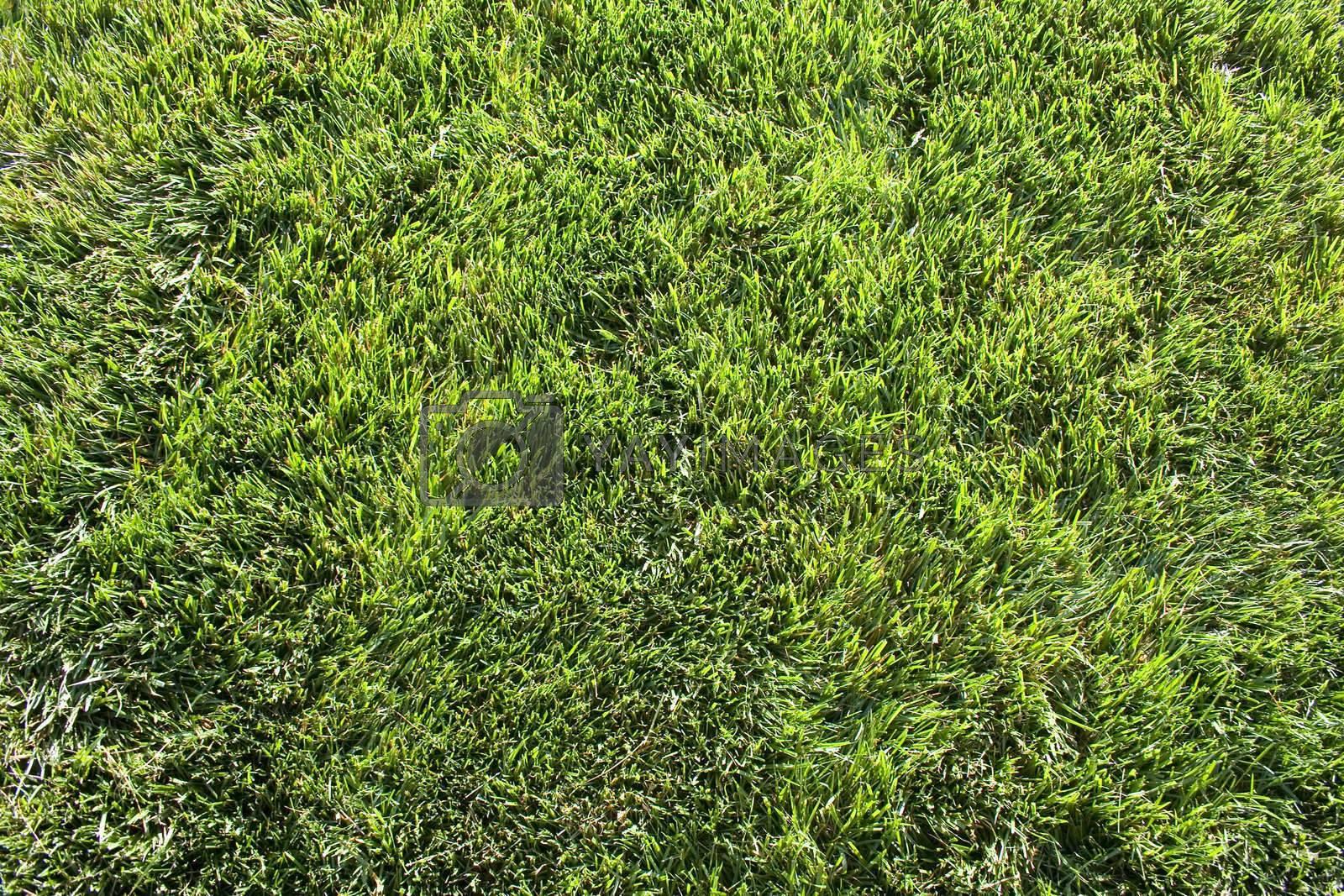 Green Grass by jclardy