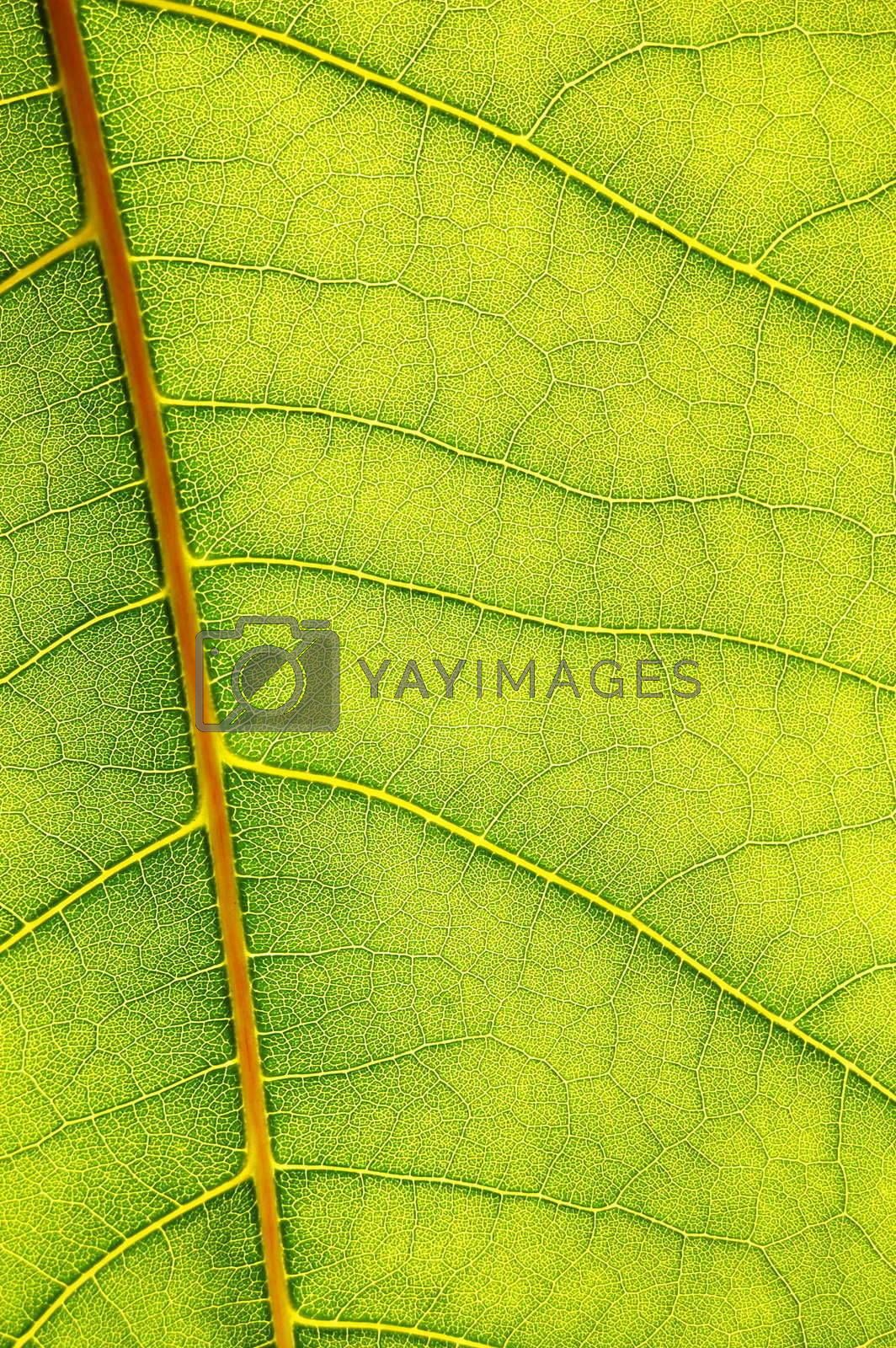 structure texture and pattern of green leaf