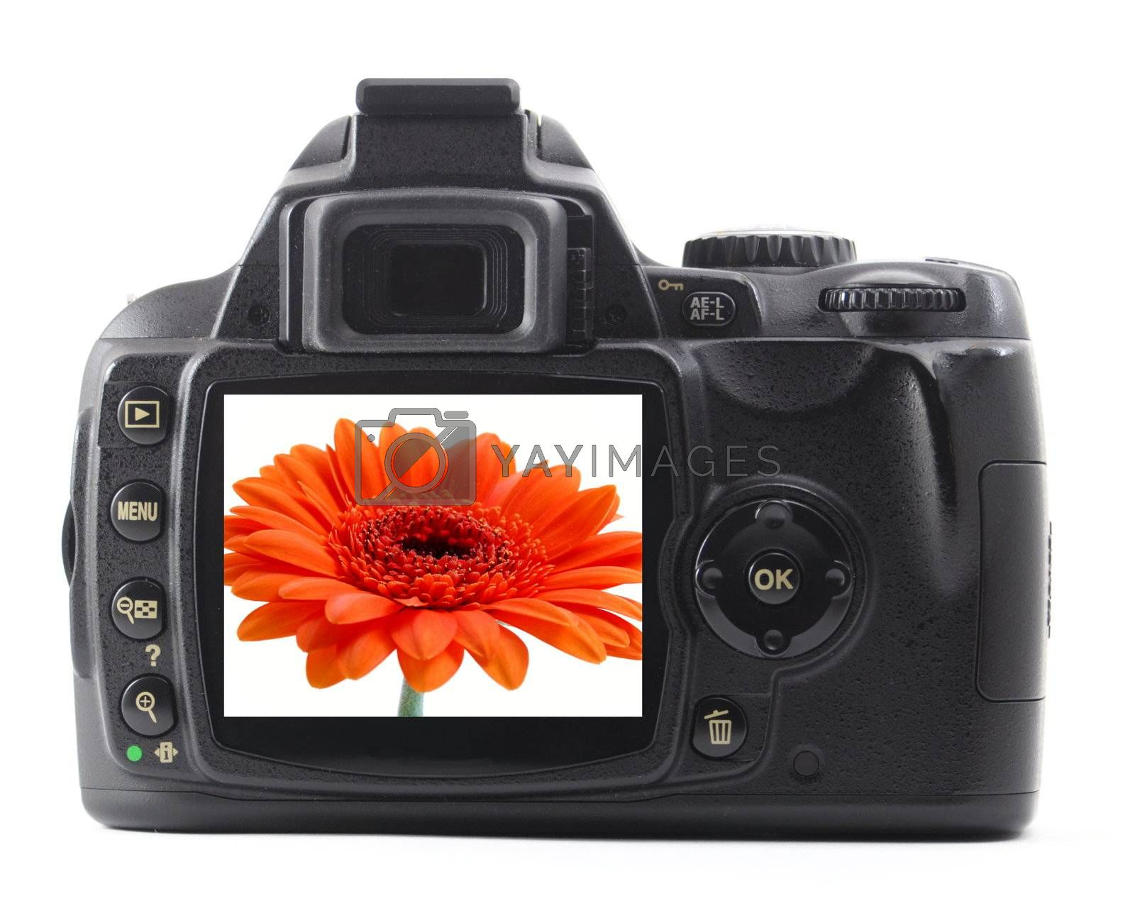 dslr with summer flower isolated on white background