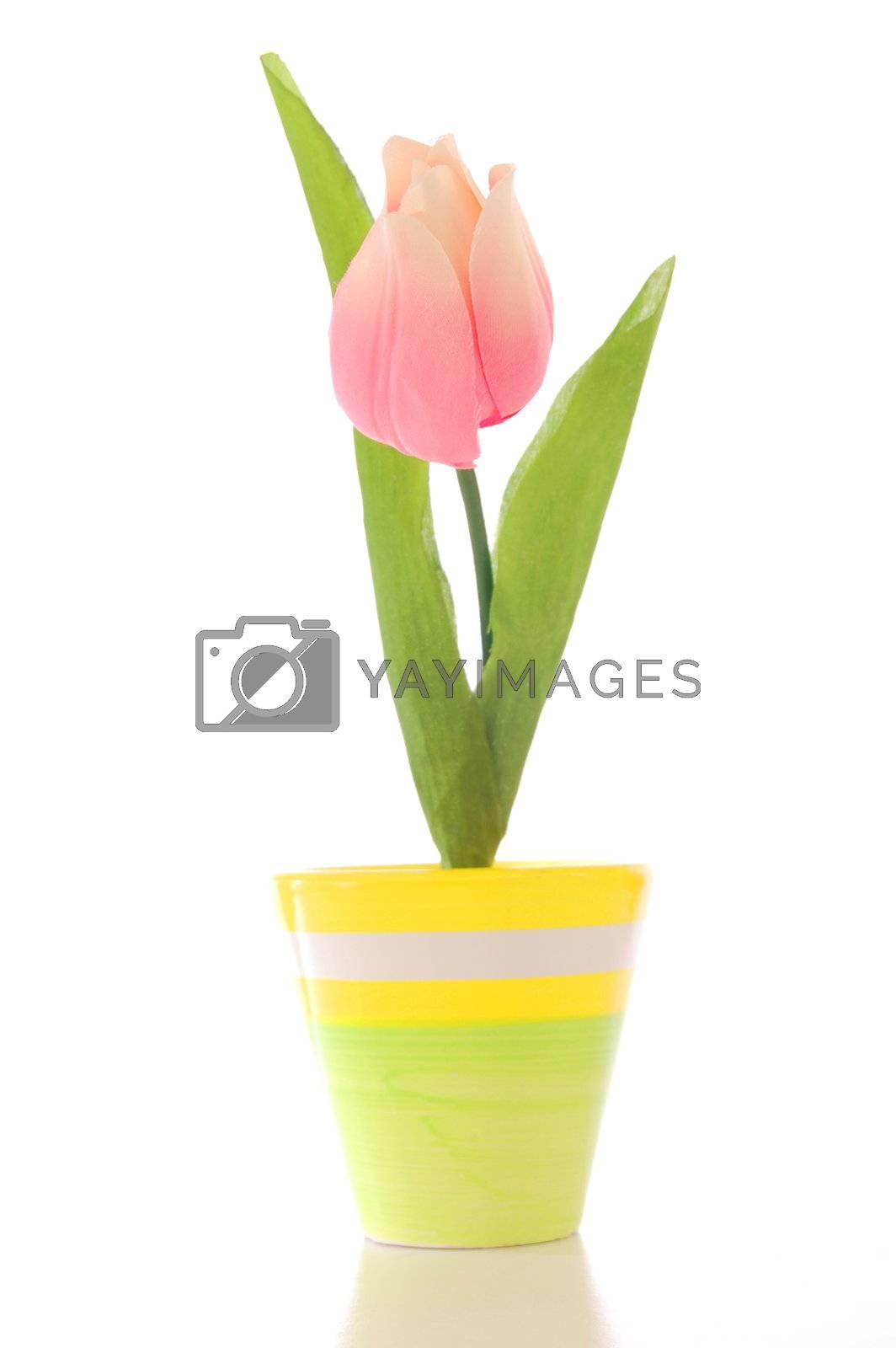 beautyful summer flower in pot with copyspace
