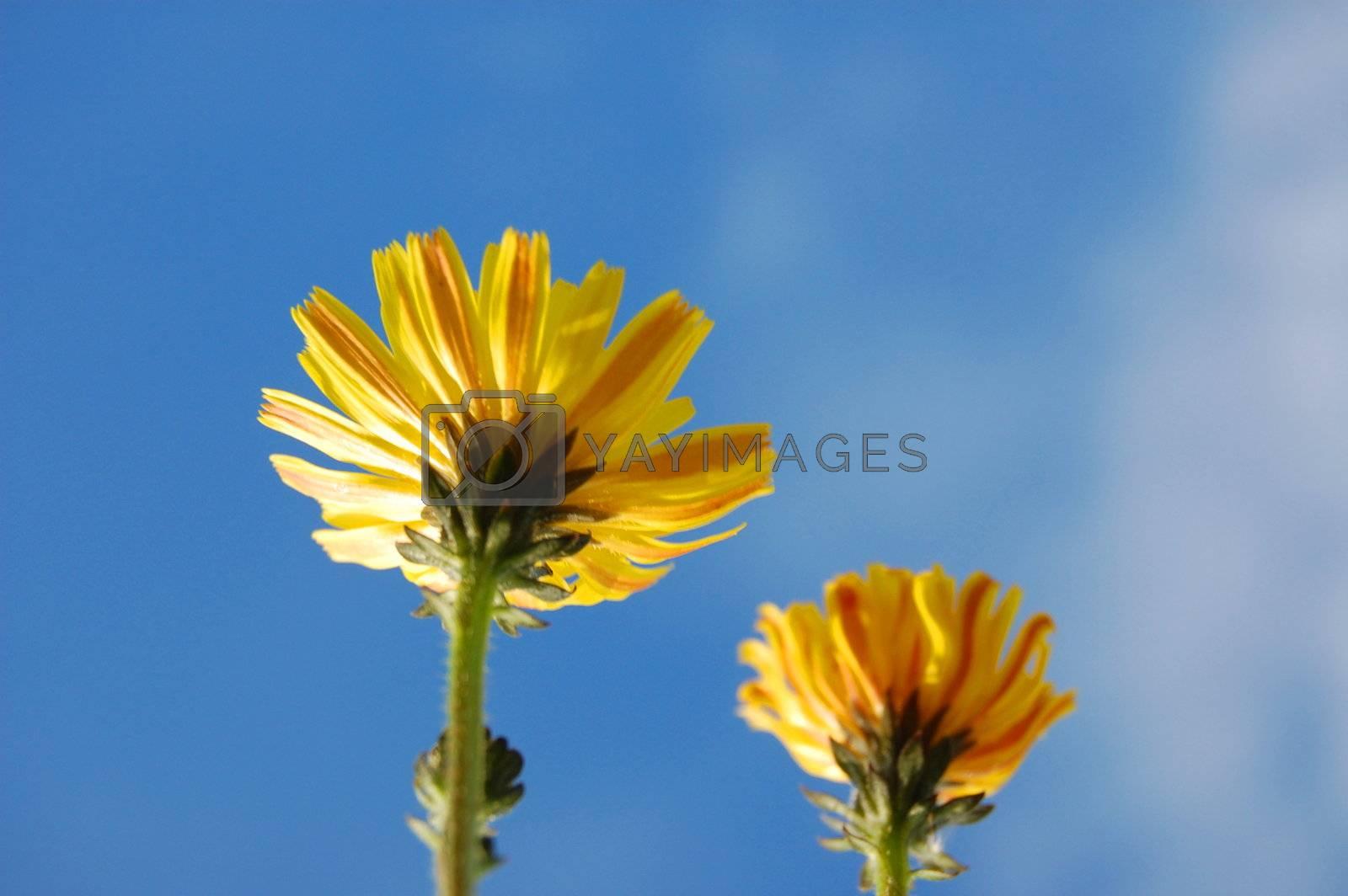 happy flower under blue summer sky on grassland