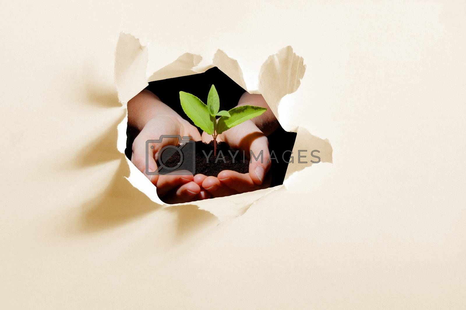 hole in paper and plant in hands showing concept of ecology and growth