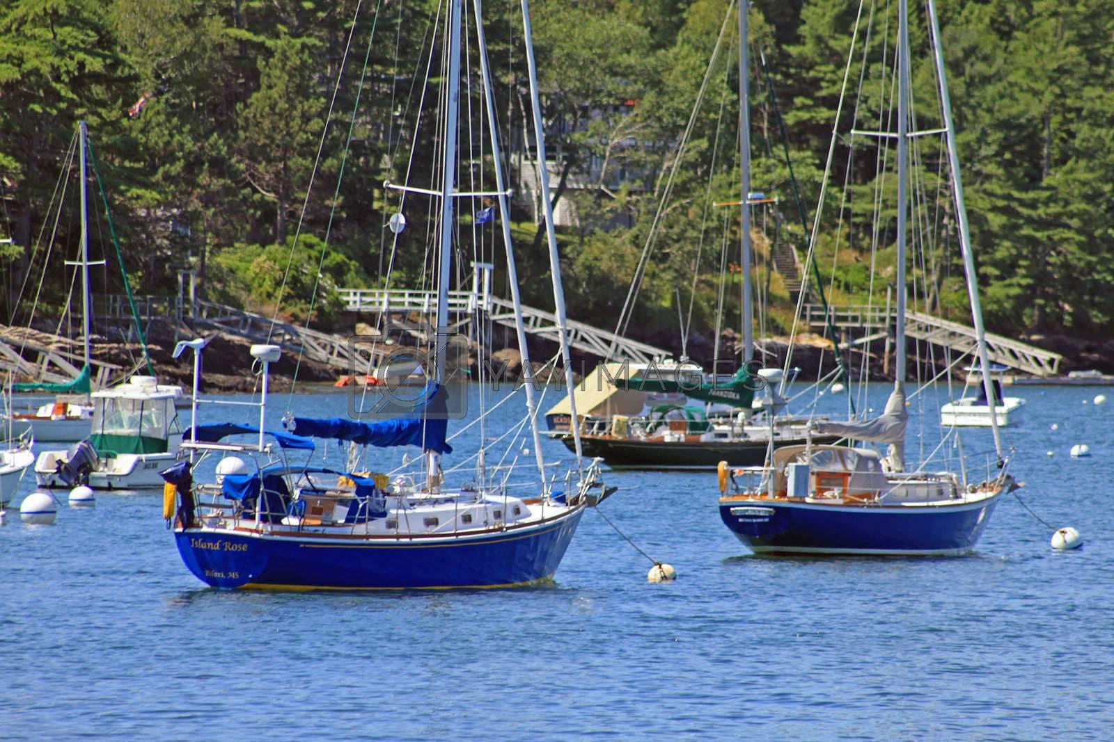 Anchored sailboats inside a coastal bay area