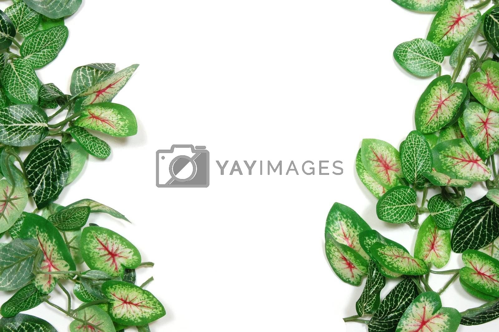border of leaves isolated on white background