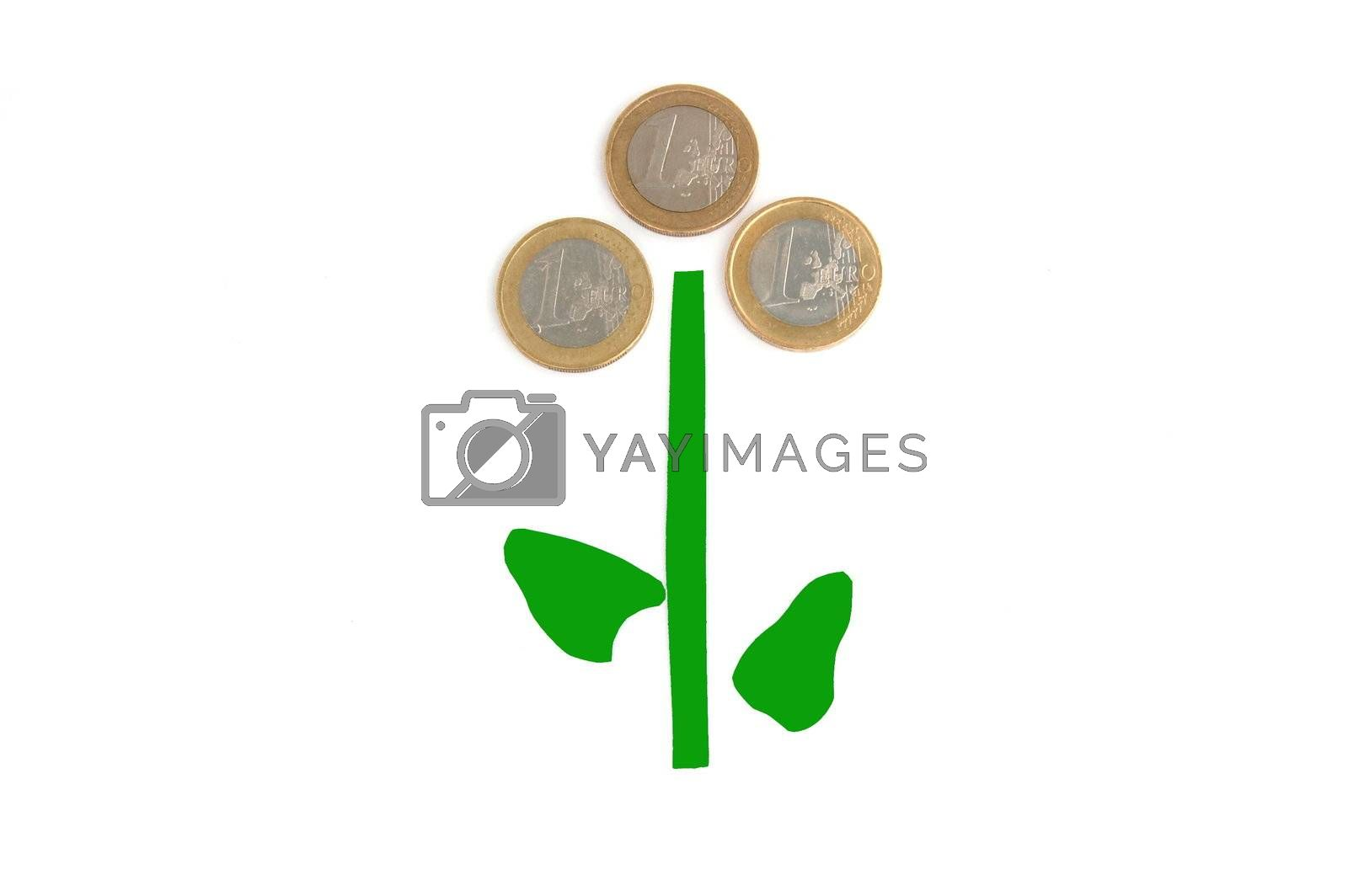 money plant isolated on a white background