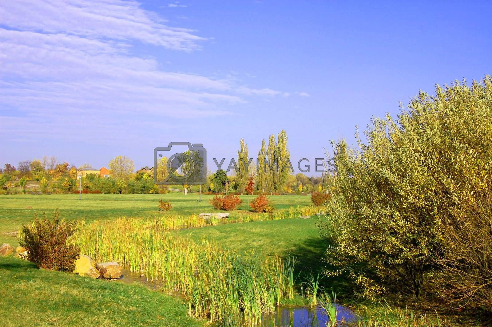 summer in the park with green trees and grass under blue sky
