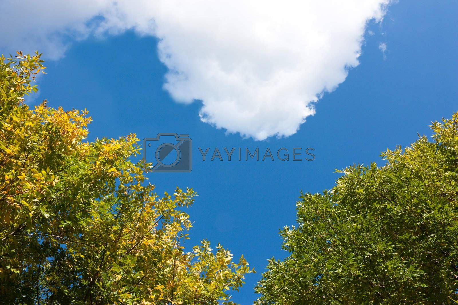 Heart-shaped sky with leaves and cloud