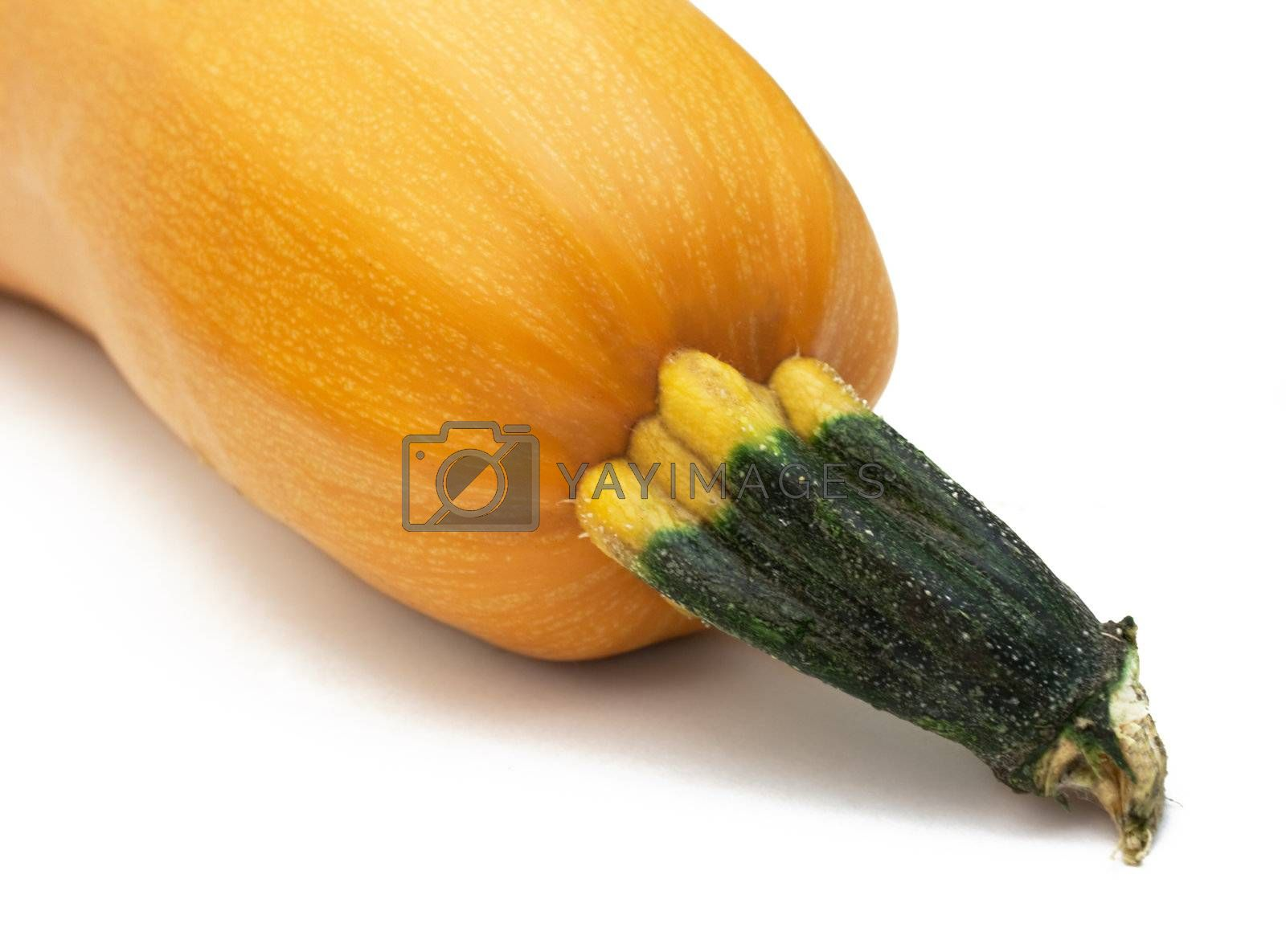 Orange pumpkin with cutted rootlet isolated on white