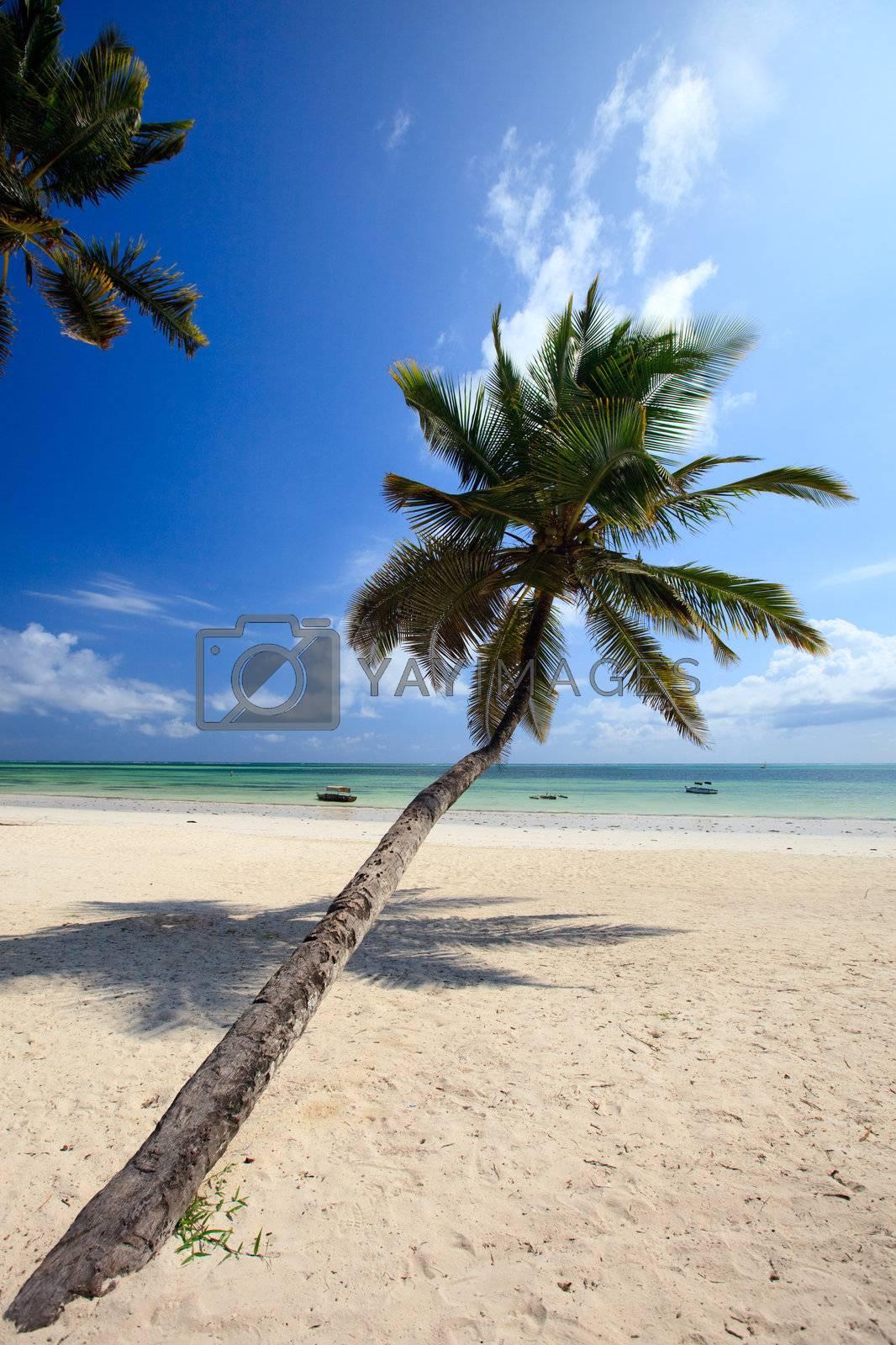 White sand tropical beach with palm trees on east coast of Zanzibar island