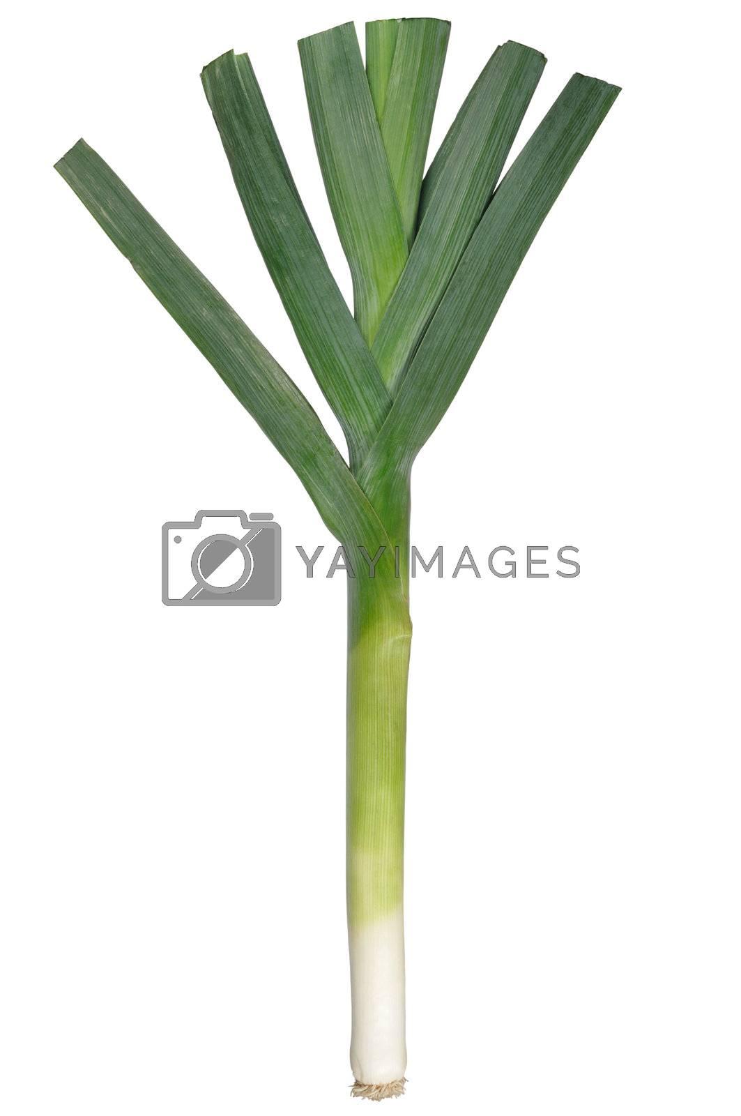 Leek isolated on white background