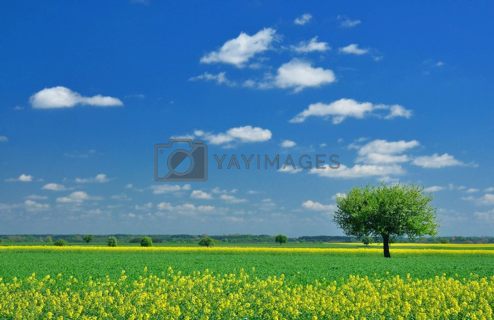 Spring landscape - lonely tree, meadow and blue sky
