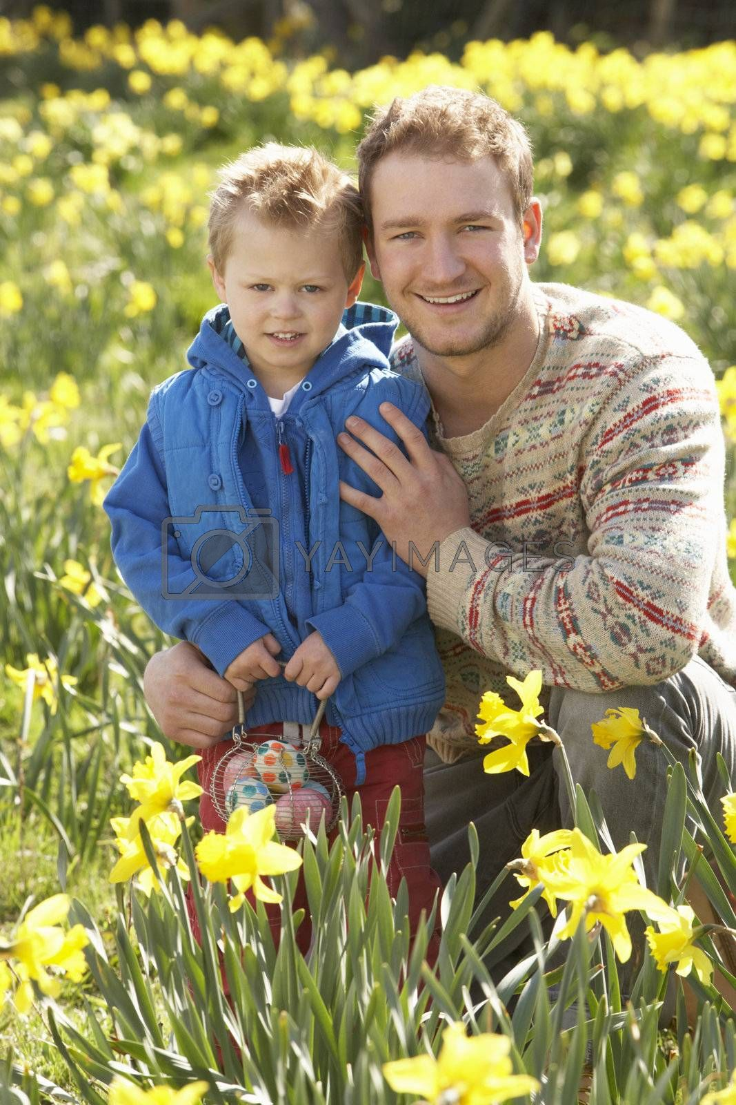 Father And Son On Easter Egg Hunt In Daffodil Field