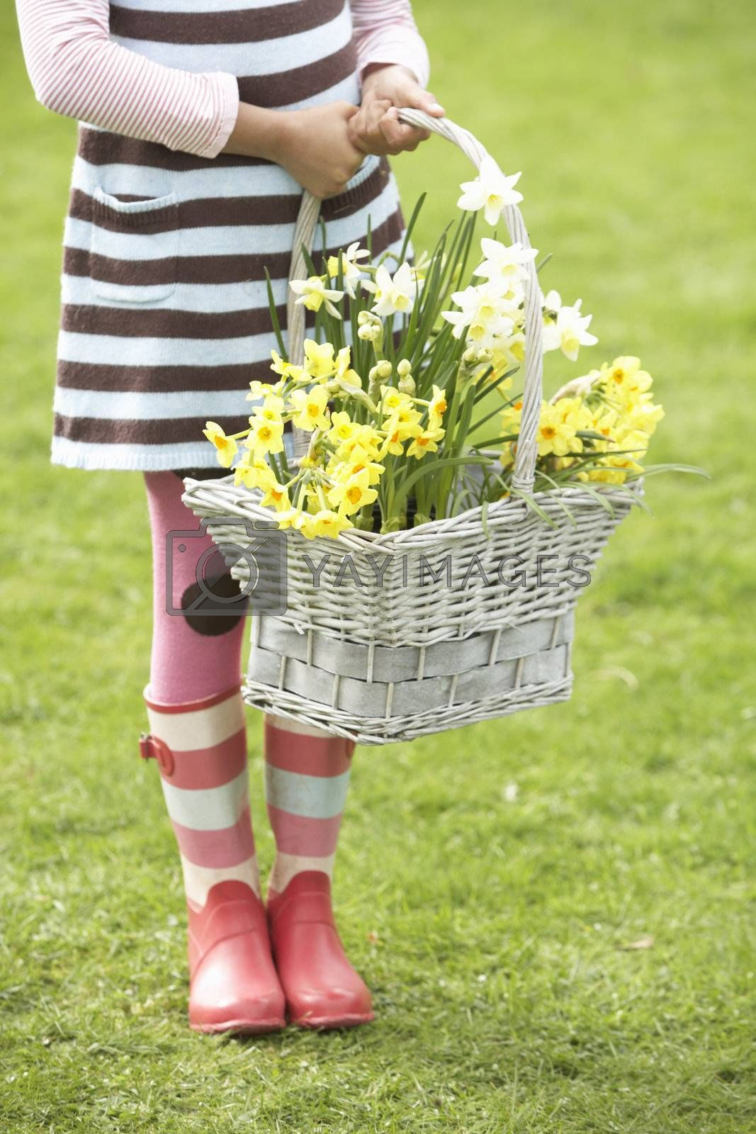 Royalty free image of Detail Of Girl Holding Basket Of Daffodils In Garden by omg_images