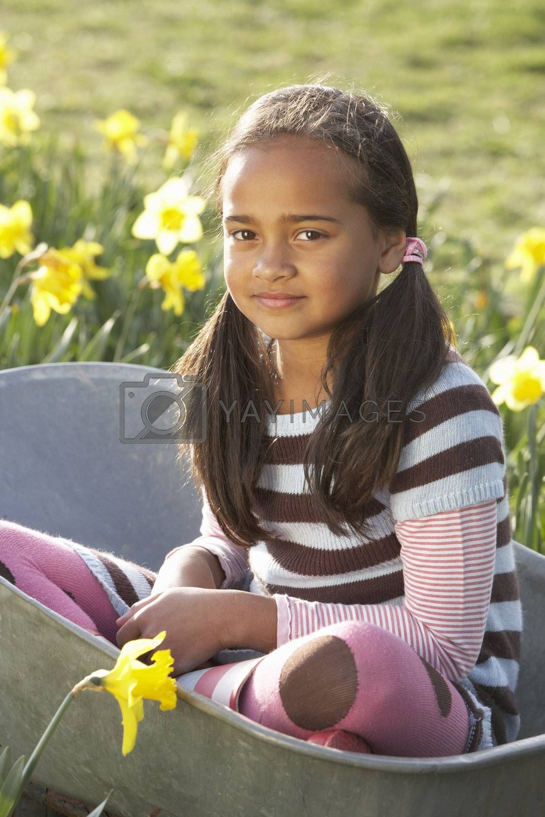 Royalty free image of Girl On Sitting In Wheelbarrow In Daffodil Field by omg_images