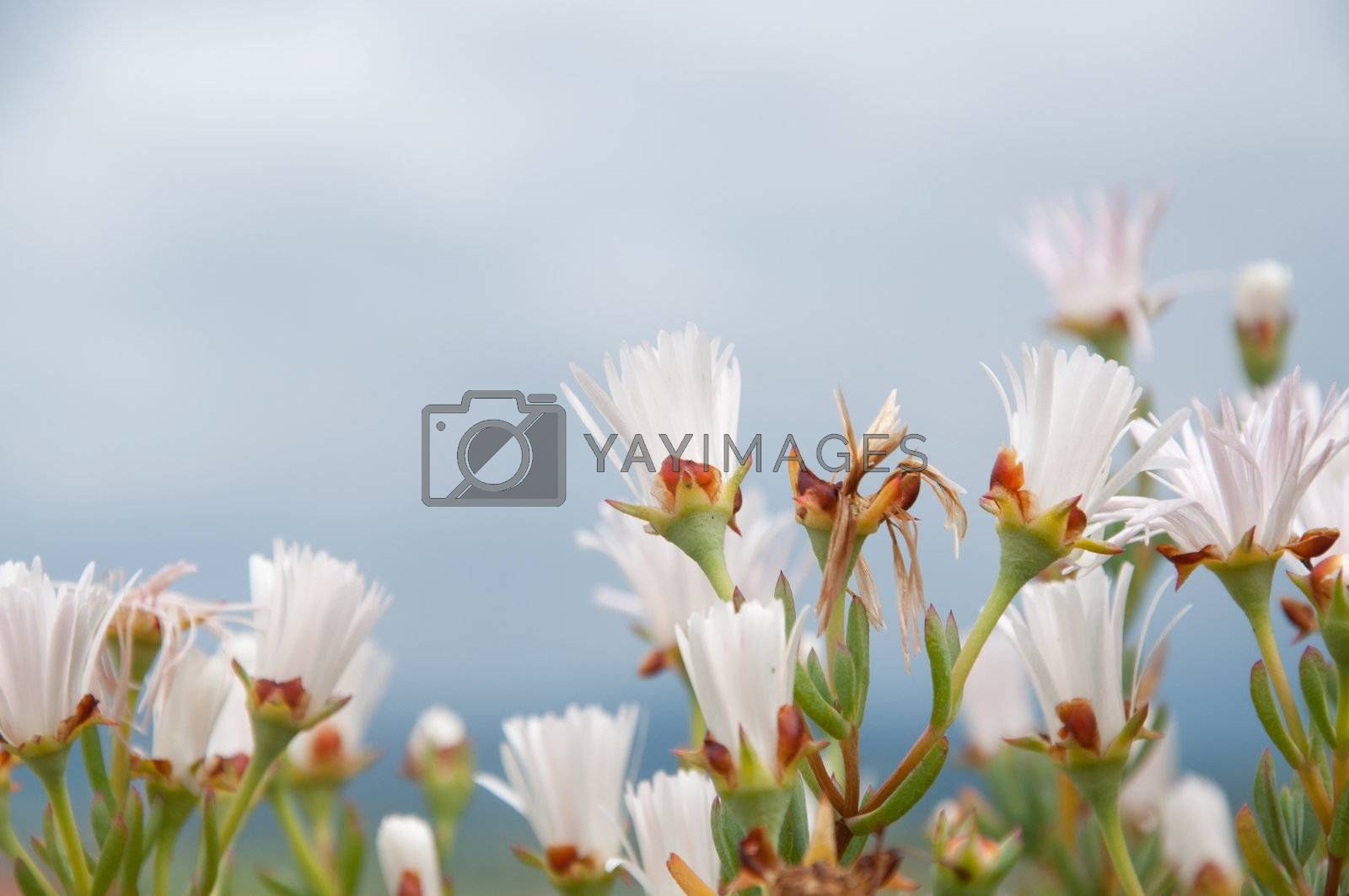 A group of flower trying to reach the sun