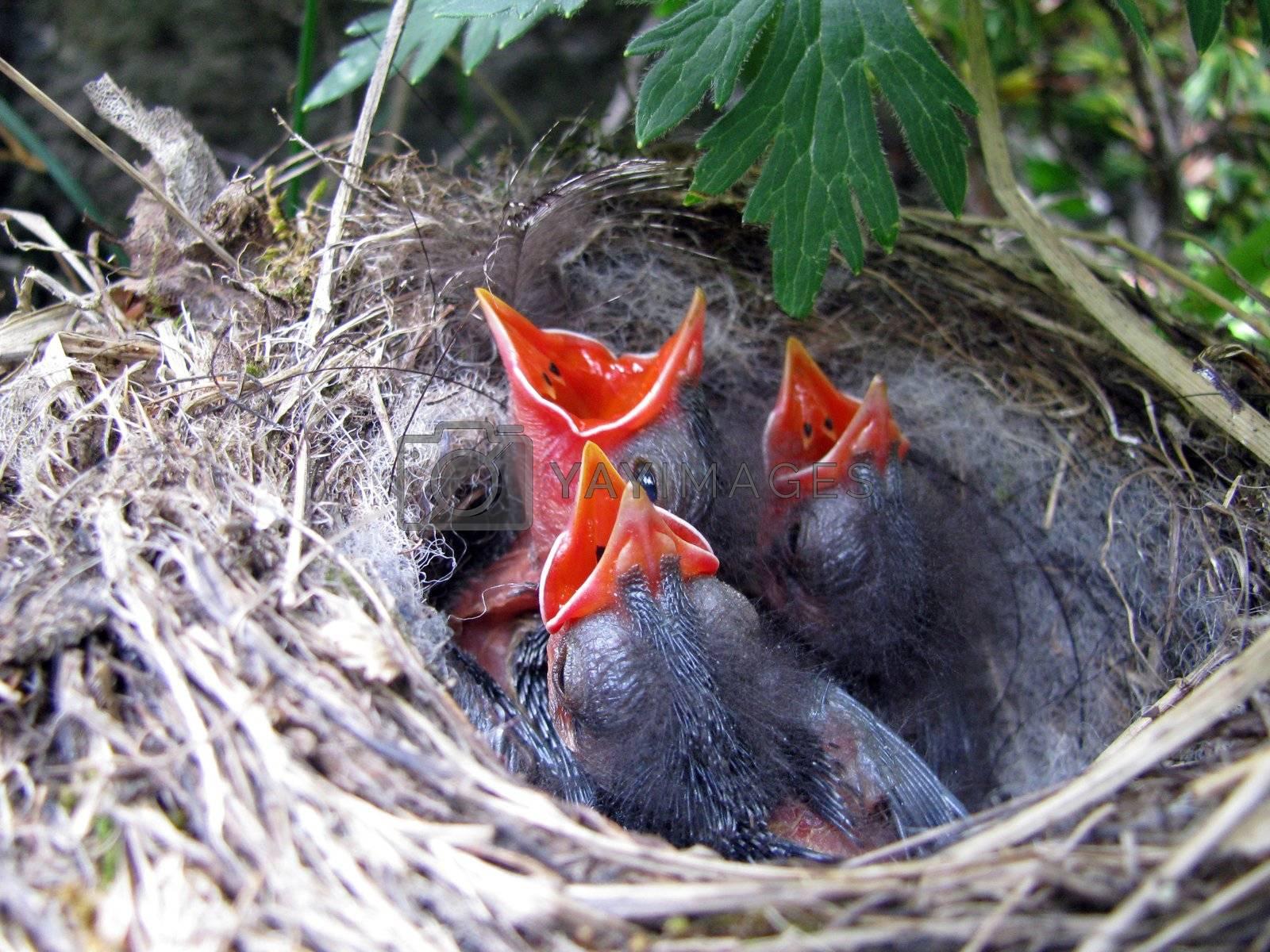 baby birds by Viktoha