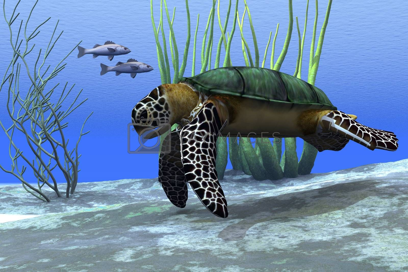 A sea turtle makes its way along the bottom of the sea looking for food.