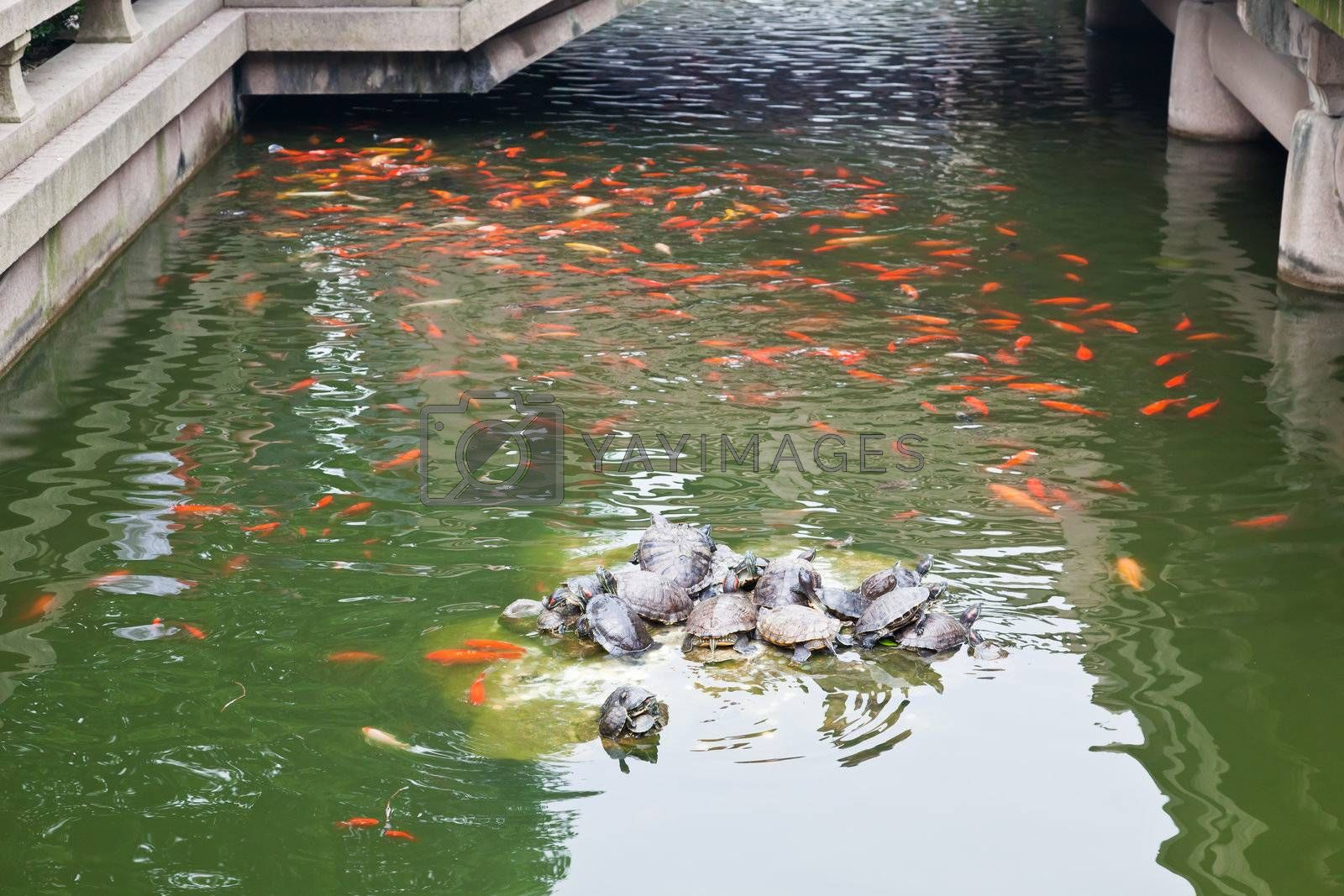 a fish pond in Han-Shan-Si Temple famous in the bell sound in Suzhou city China
