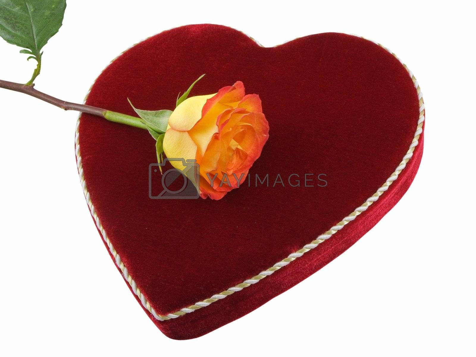 Valentines chocolates box with orange rose, isolated on white
