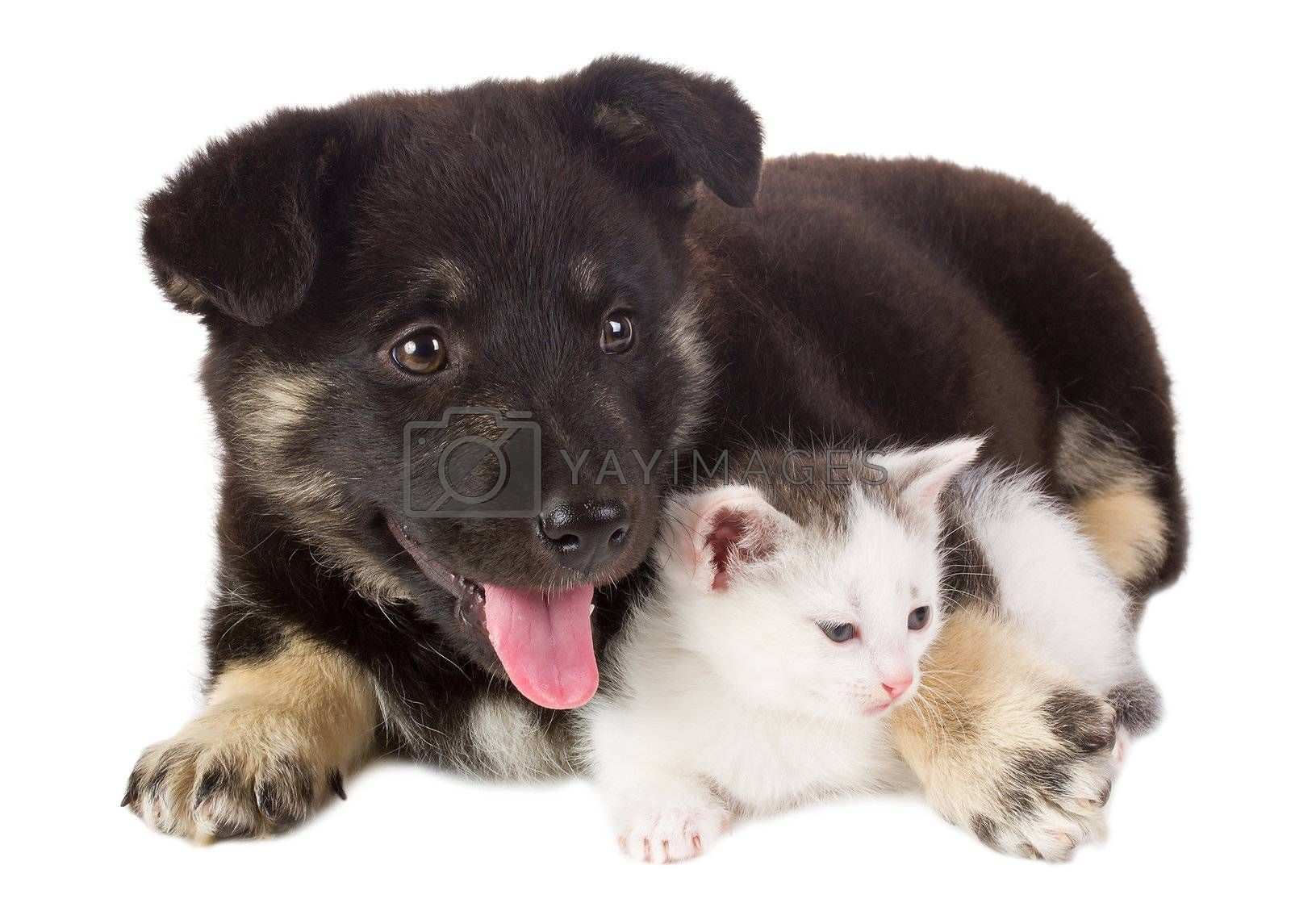 close-up puppy and kitten, isolated on white