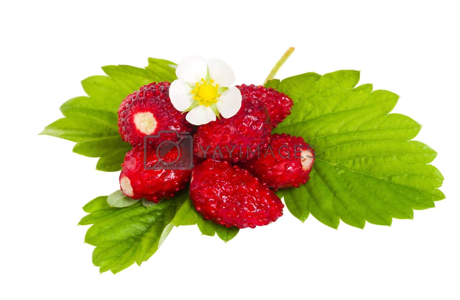 close-up wild strawberries with flower and leaves, isolated on white