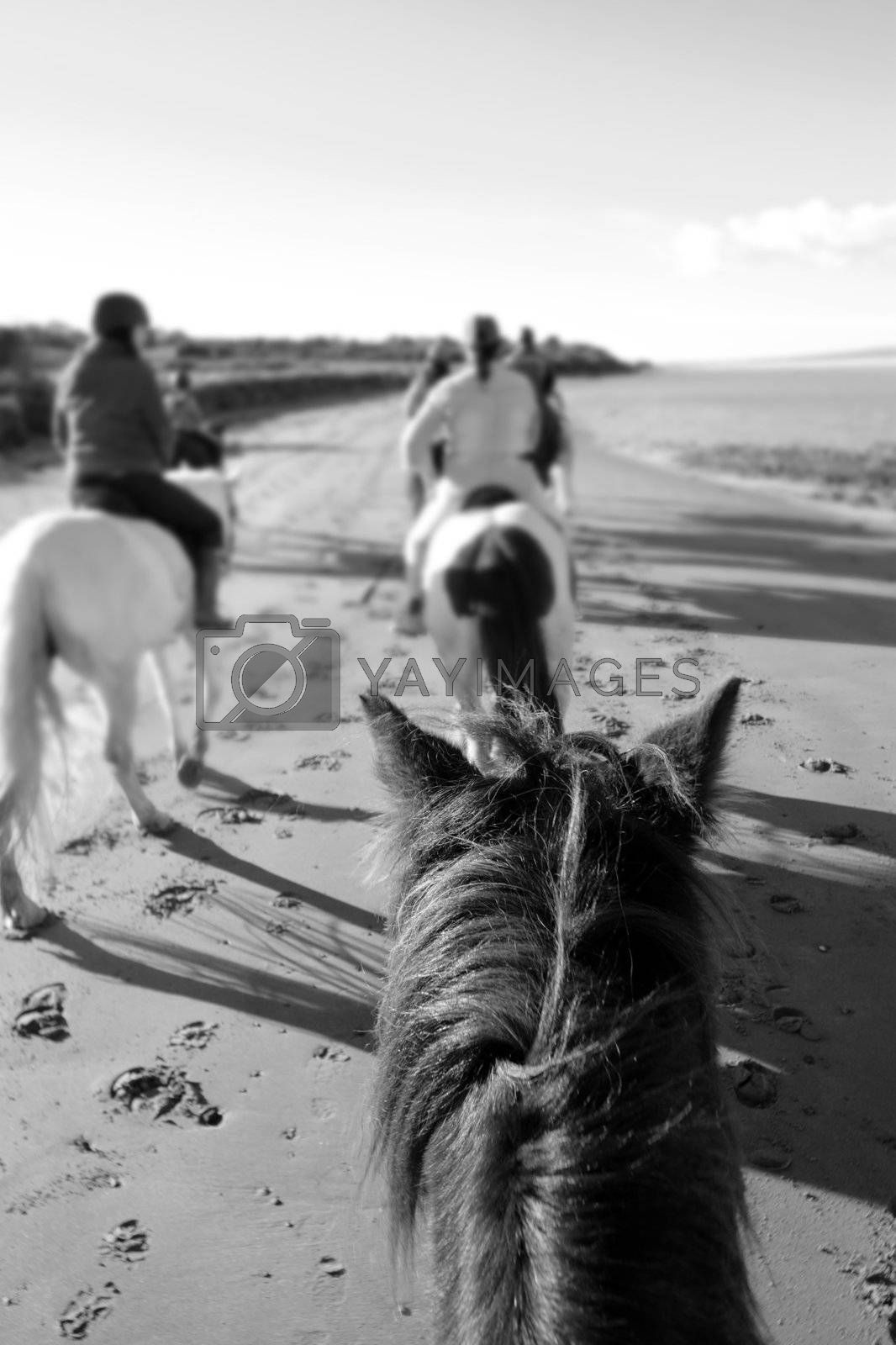 a riders view of a pony ride on a beautiful beach in county kerry ireland in black and white