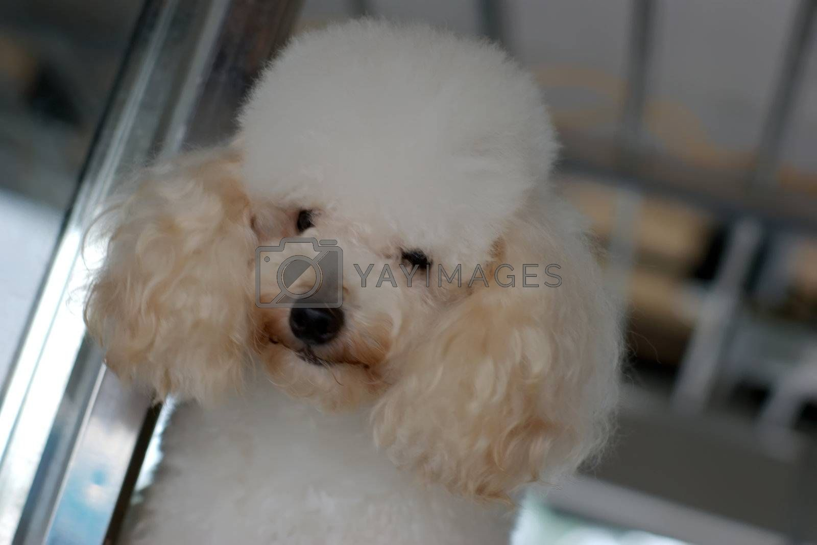 Royalty free image of dog by tang9555