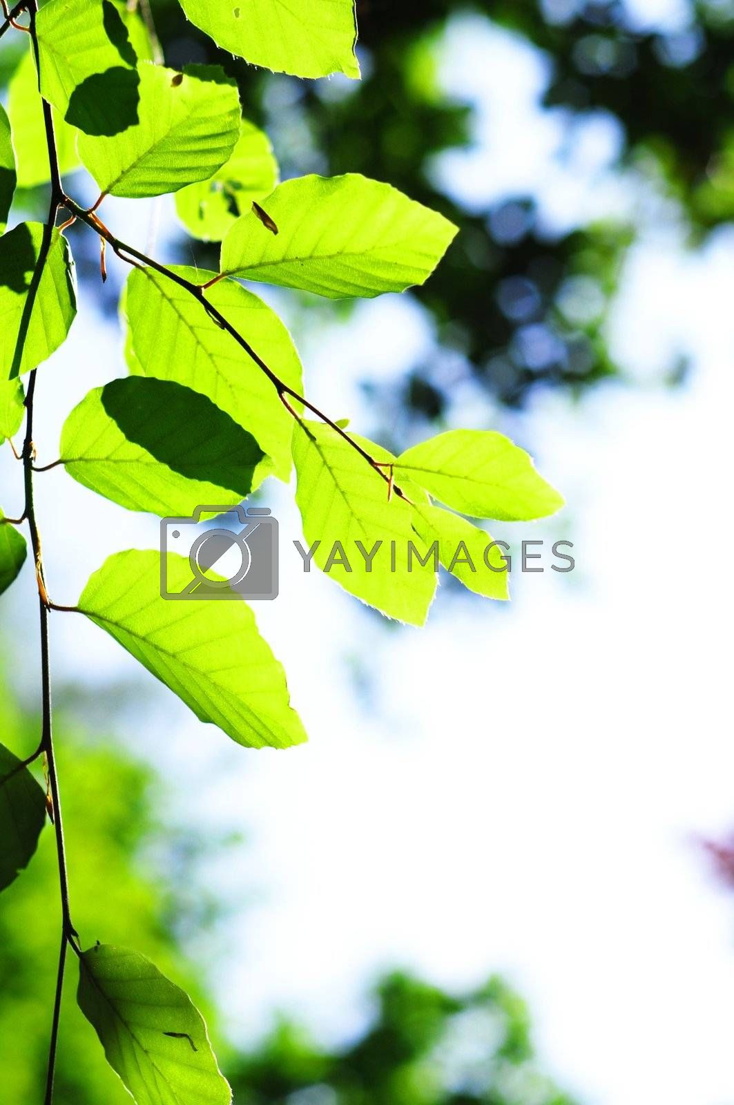 Royalty free image of beautyful nature by gunnar3000