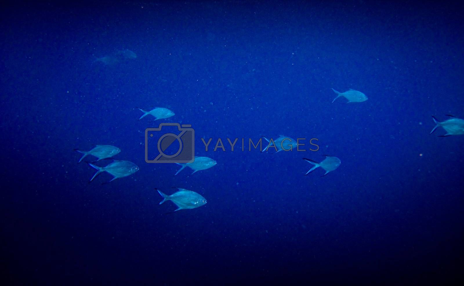 Royalty free image of under water world at Maldives by anobis