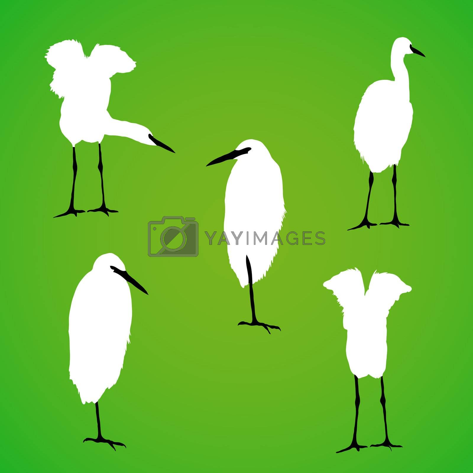 Royalty free image of Vector bird silhouette by homydesign