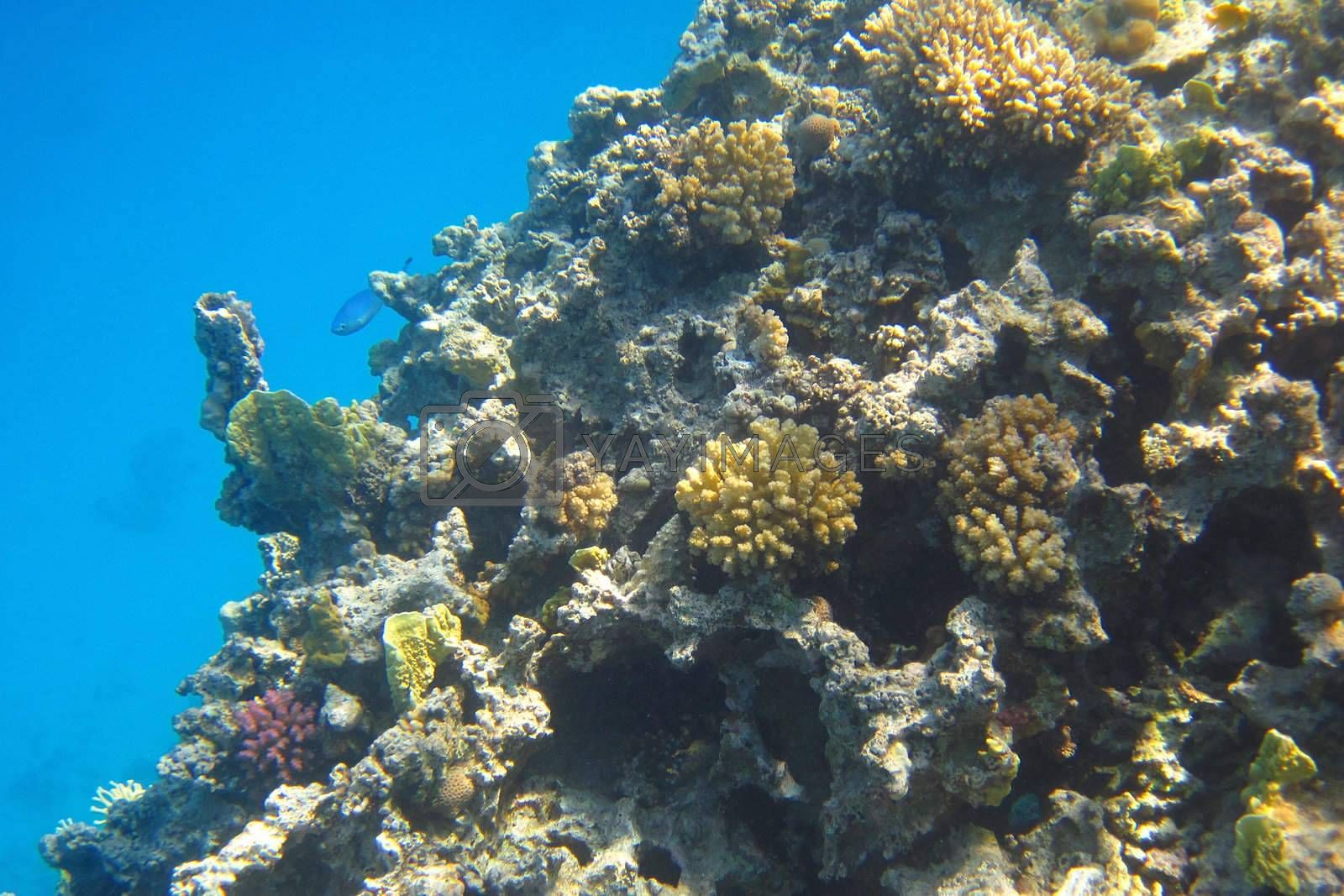 beautiful colorful coral reef with the sea
