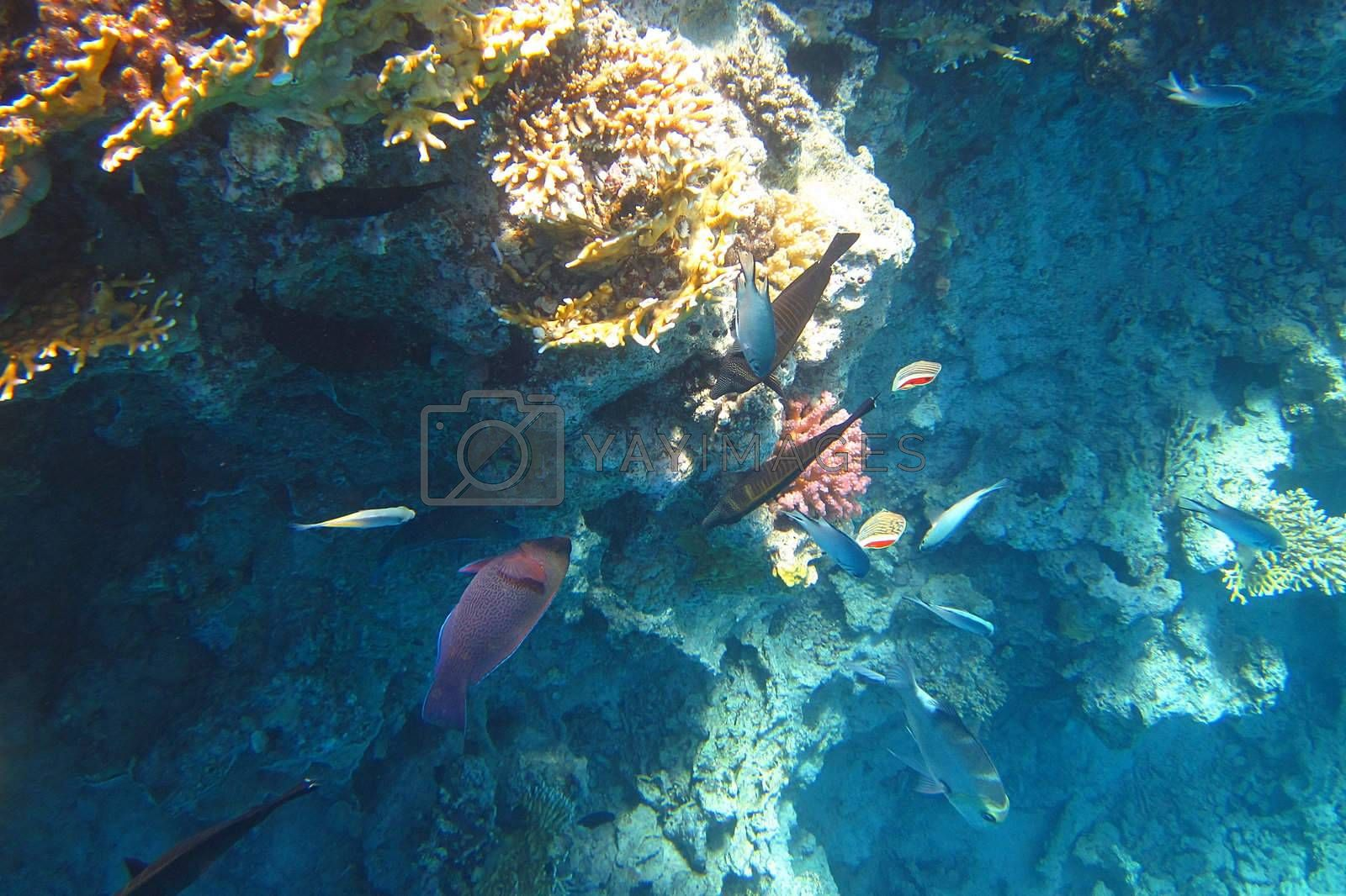 lots of colorful fish in the sea during dive