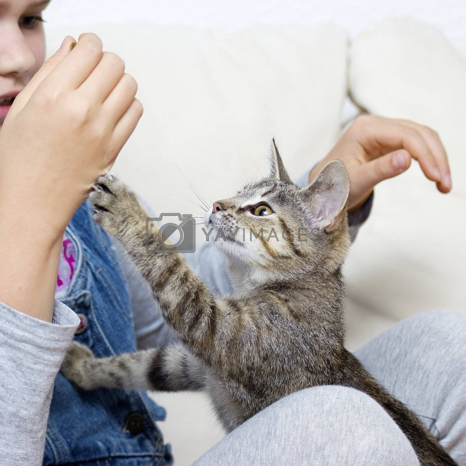 a girl is playing with a kitten