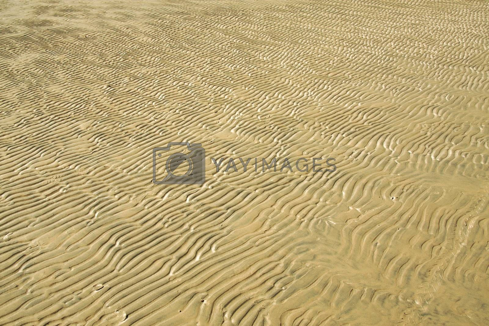 Sandy waves on a coast after outflow