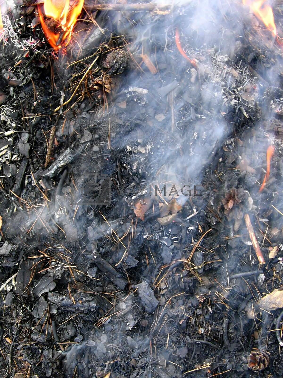 Burning wood laying - cones, dry needles and a grass in flame