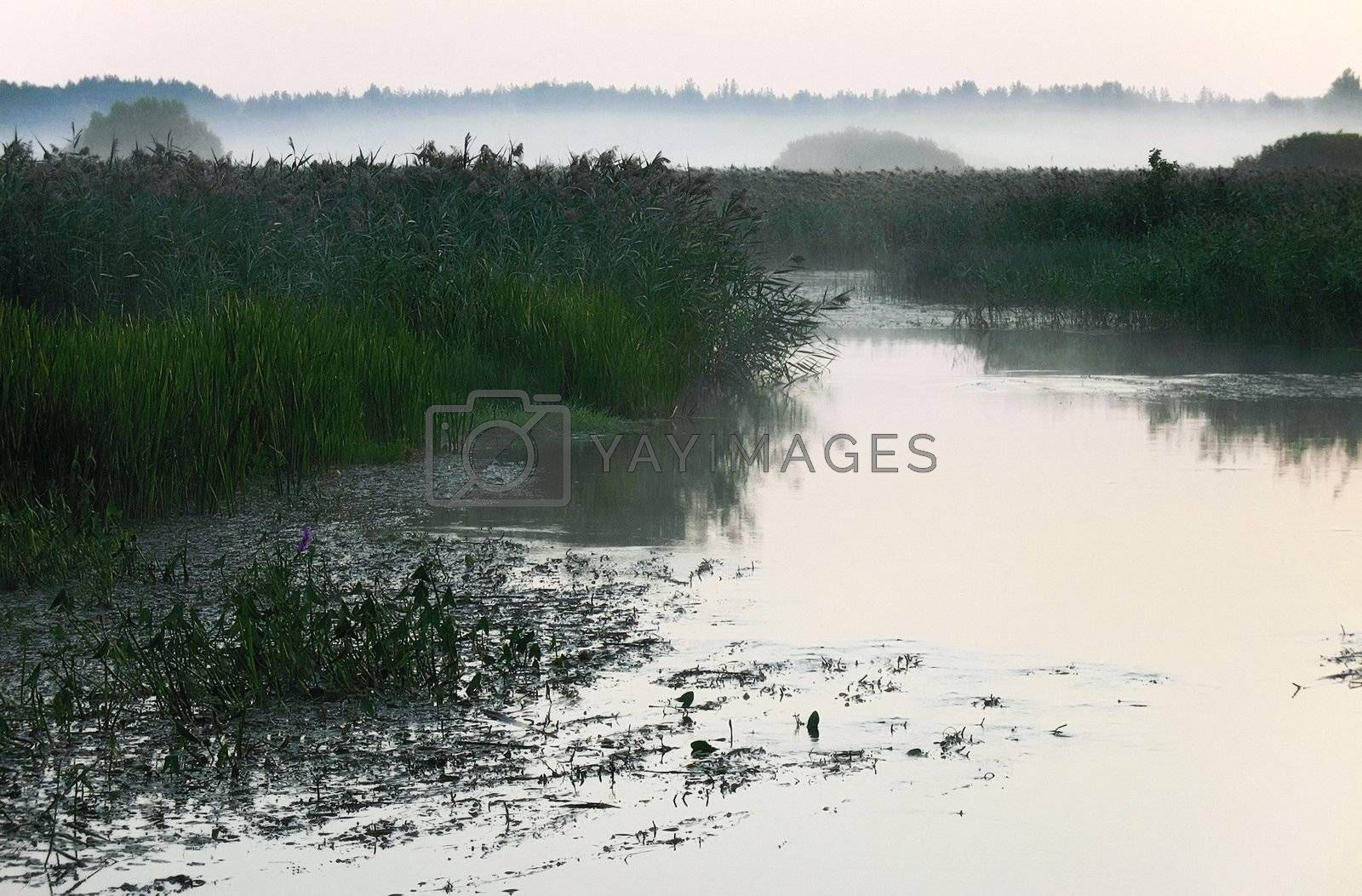 Morning fog on the silent marshy river