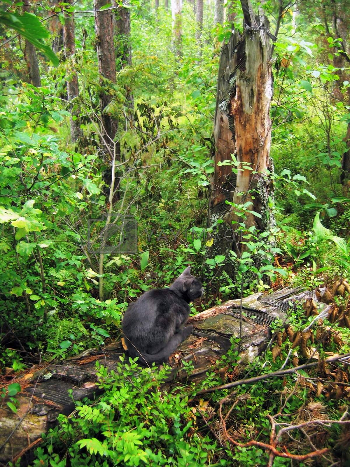 The black cat sits on the hurricane broken  tree