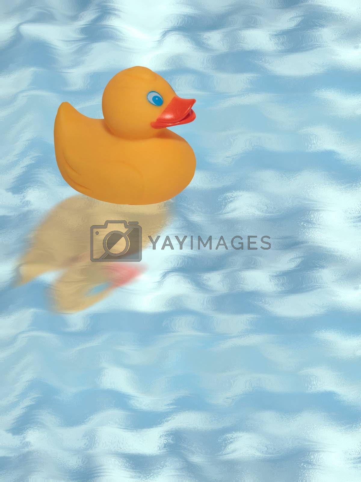 a rubber duck swimming in the blue water with copy space.includes a clipping path.
