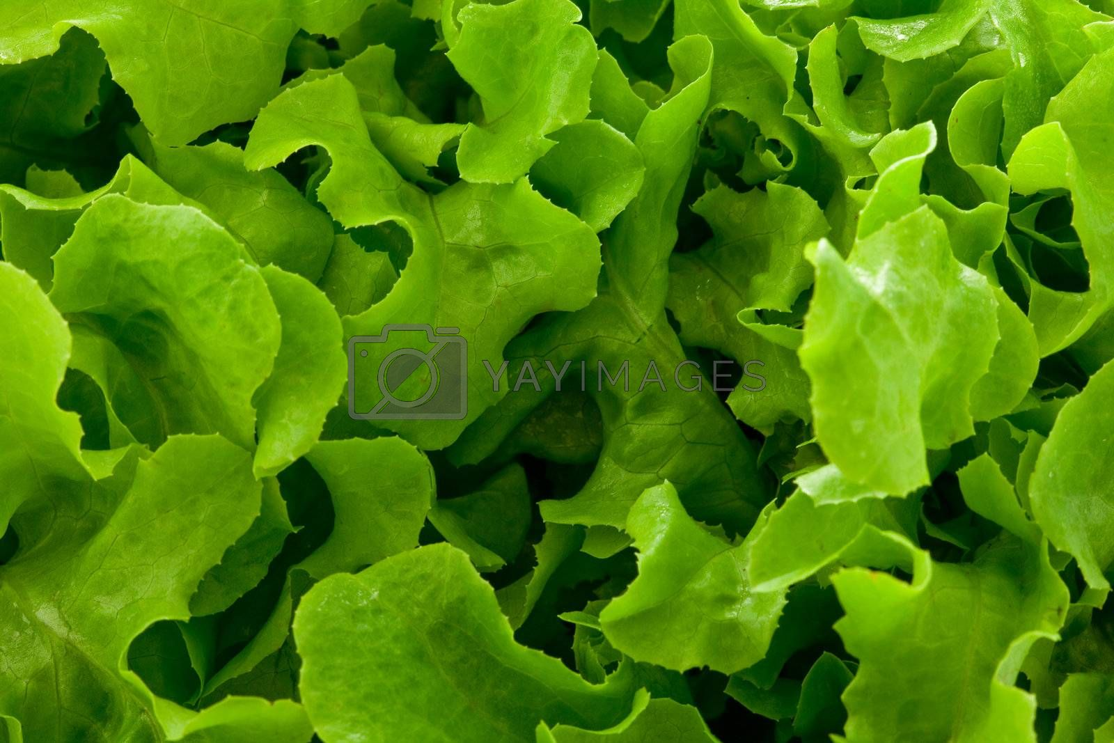 photo of a delicious fresh green salad pattern background