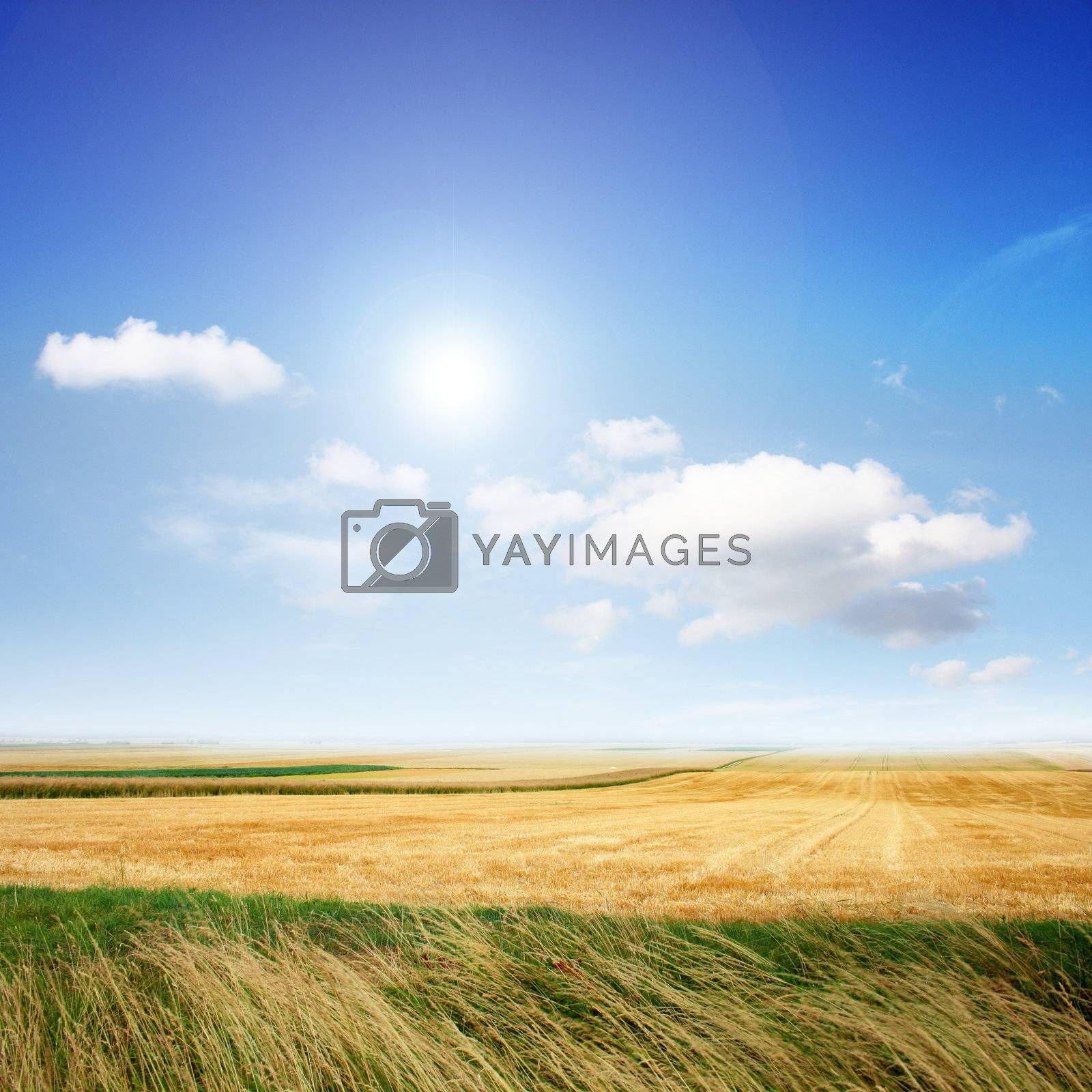 Beautiful scenery in the summer on sunny weather