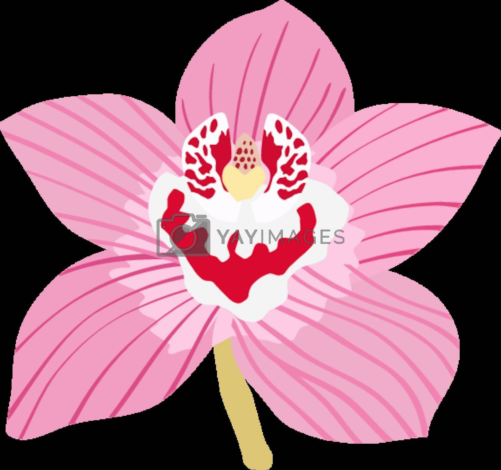 Royalty free image of Orchid by Perysty