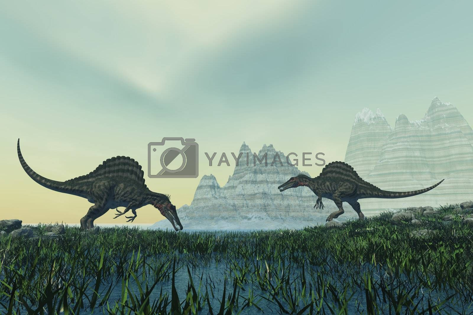 Two Spinosaurus dinosaurs drink from a marsh area in prehistoric times.