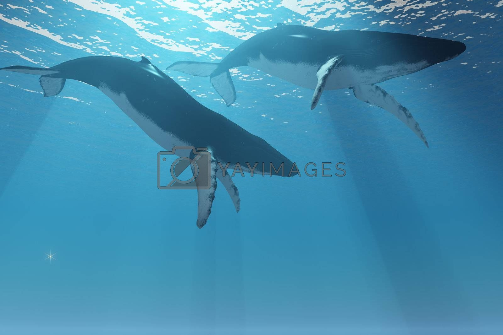 Two Humpback whales swim near the ocean surface in the light rays from the sun.